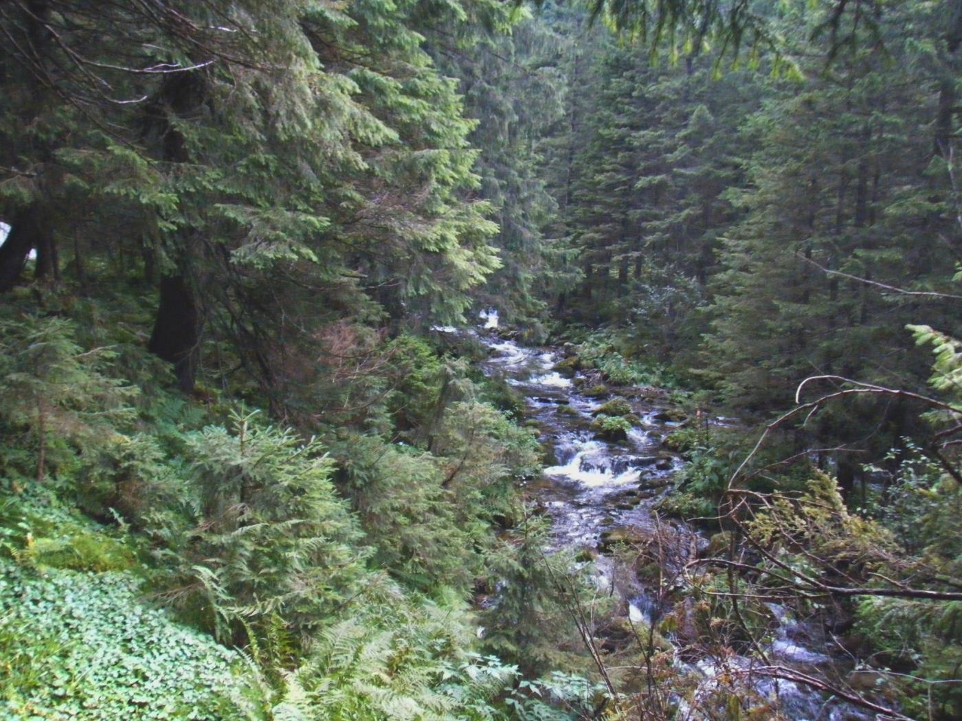 25760 скачать обои Пейзаж, Река, Деревья - заставки и картинки бесплатно