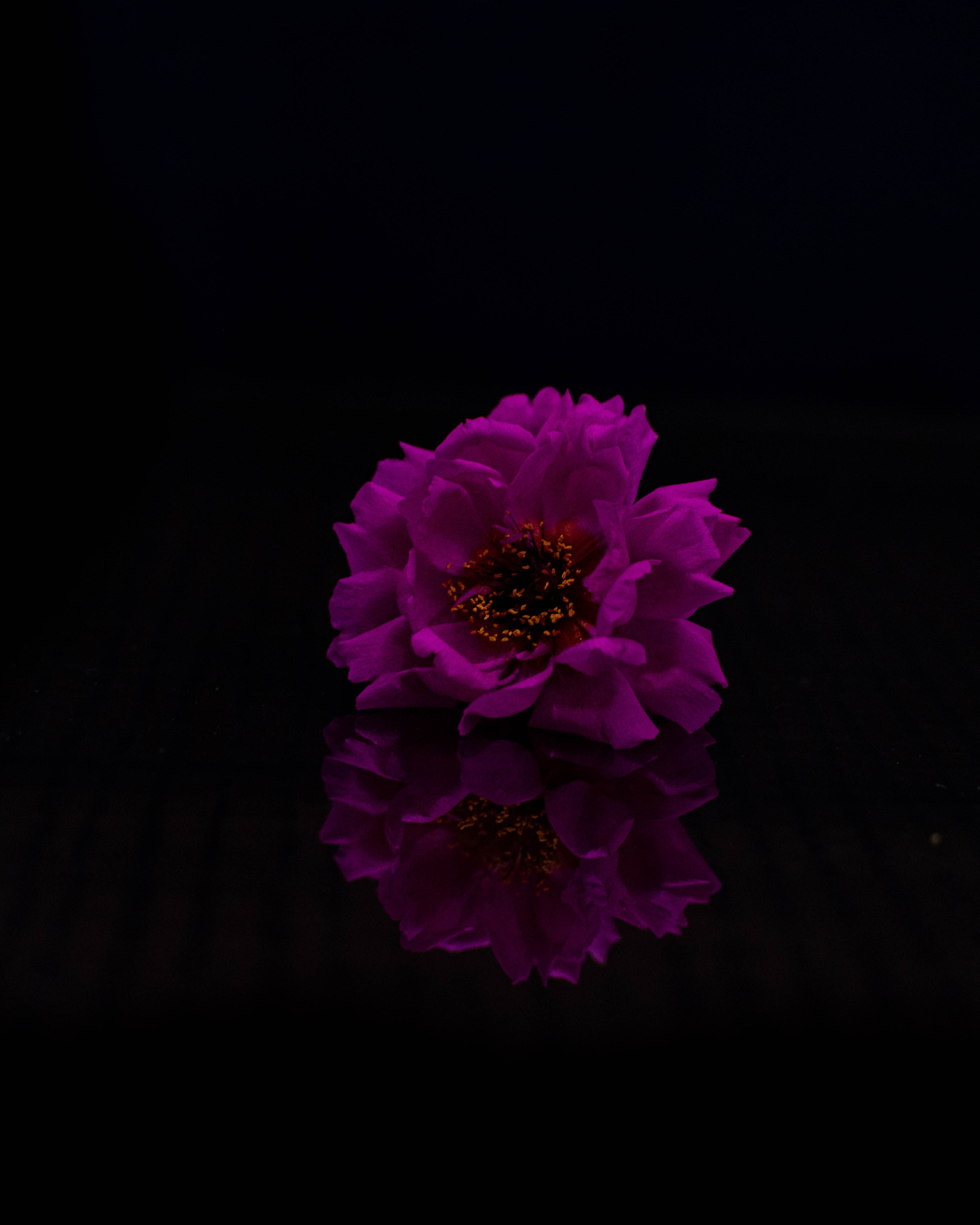 119523 Screensavers and Wallpapers Purple for phone. Download Purple, Flowers, Violet, Flower, Petals, Photoshop pictures for free