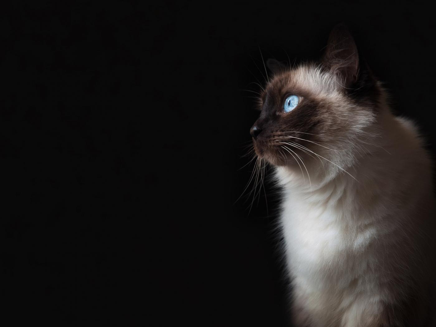 49733 Заставки и Обои Кошки (Коты, Котики) на телефон. Скачать Кошки (Коты, Котики), Животные картинки бесплатно