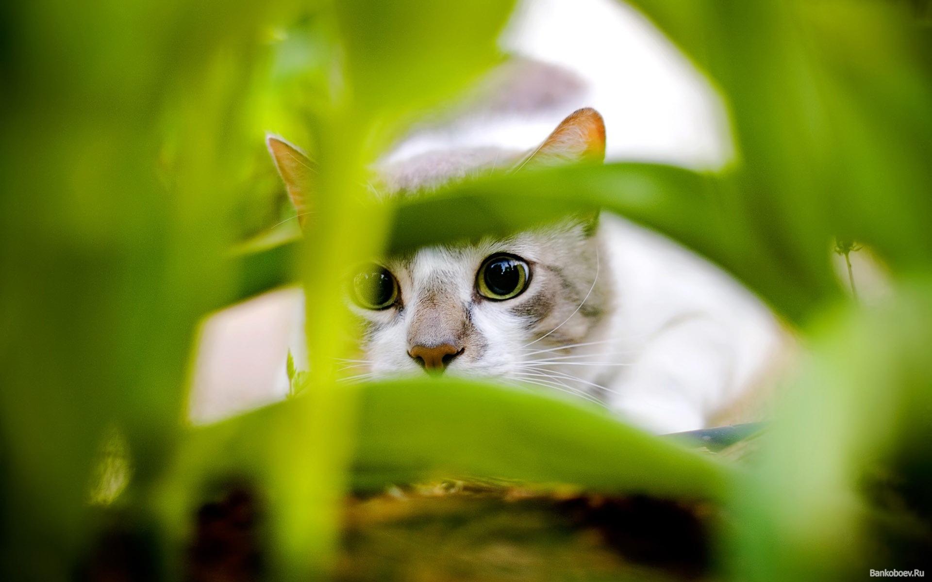 9343 скачать обои Животные, Кошки (Коты, Котики), Трава - заставки и картинки бесплатно