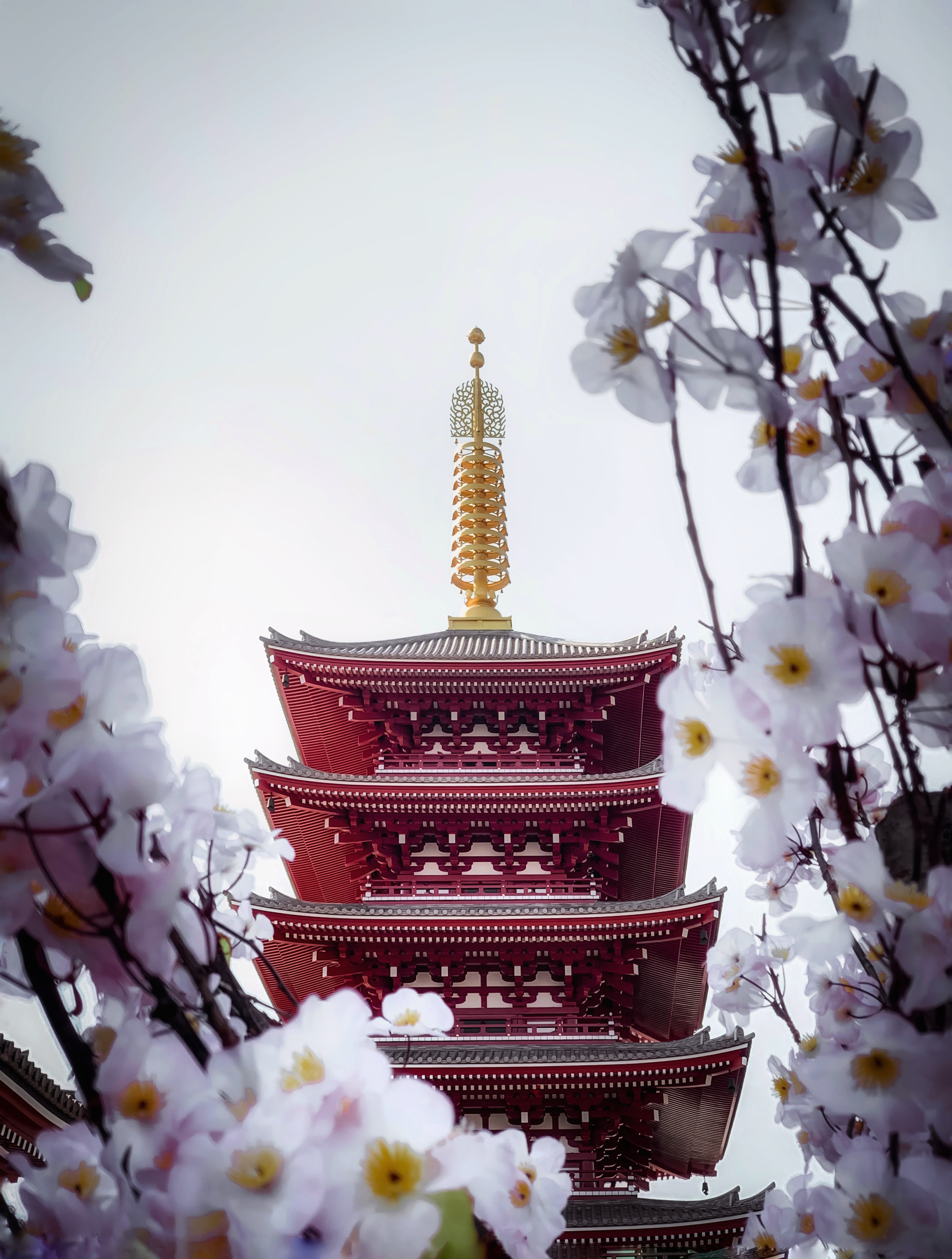 62165 Screensavers and Wallpapers Sakura for phone. Download Flowers, Sakura, Building, Miscellanea, Miscellaneous, Pagoda, Temple pictures for free