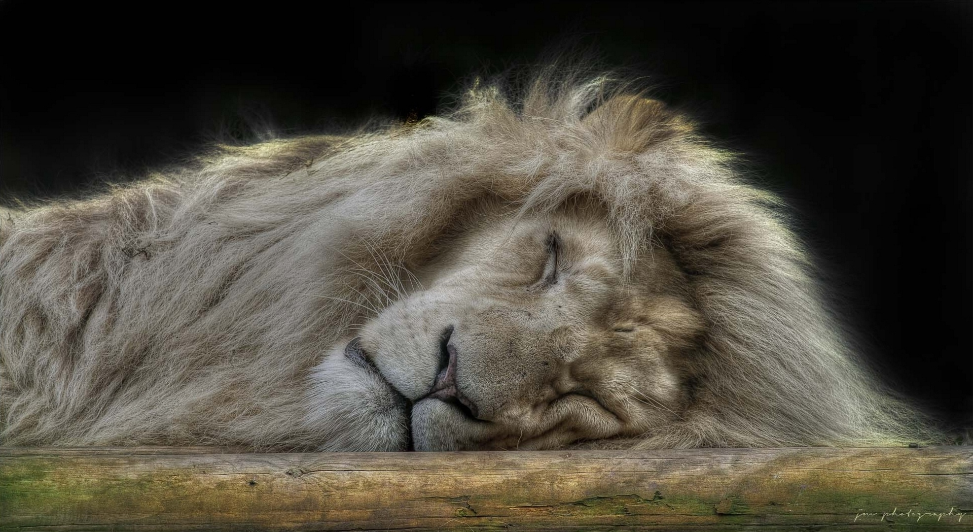 103363 download wallpaper Animals, Lion, Muzzle, Sleep, Dream, Fluffy, Big Cat, Predator screensavers and pictures for free