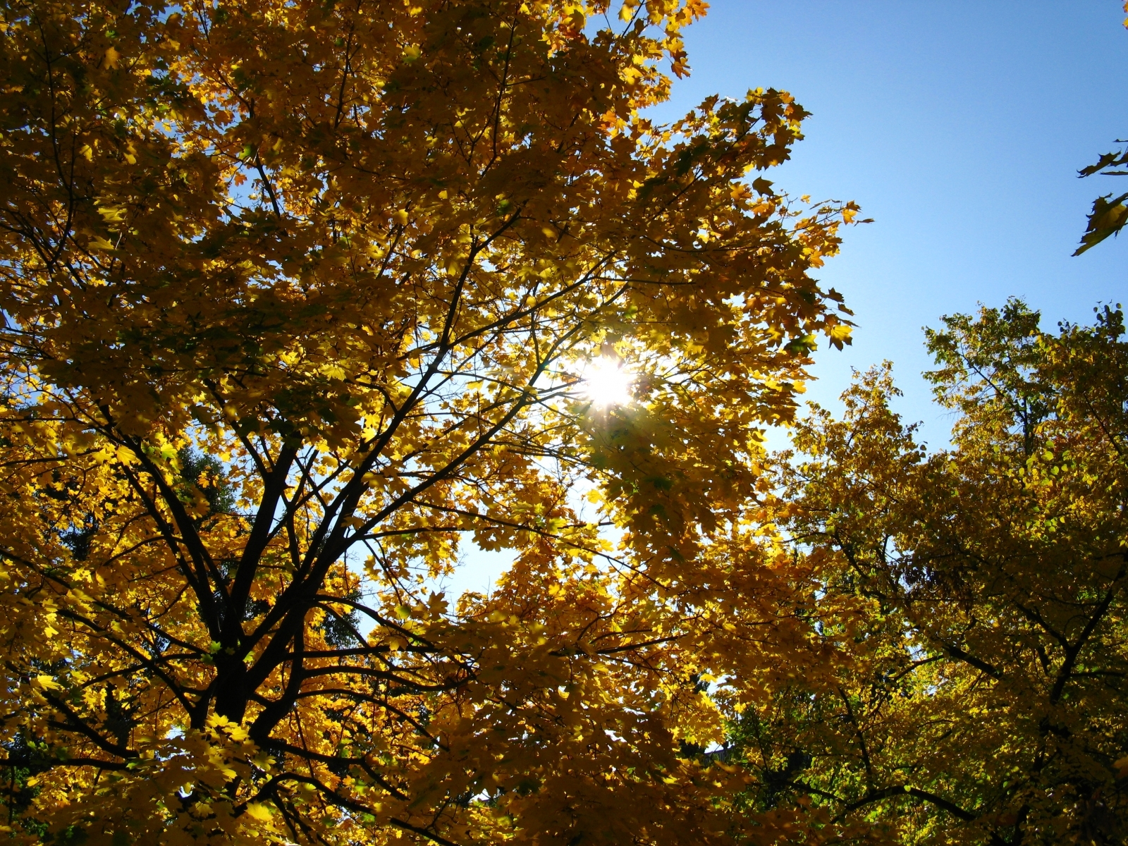 5616 download wallpaper Landscape, Trees, Autumn, Sun screensavers and pictures for free