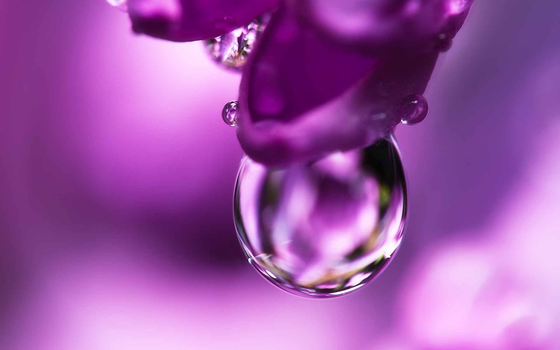 41694 download wallpaper Objects, Drops, Violet screensavers and pictures for free