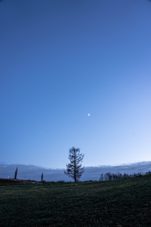 91242 免費下載壁紙 性质, 树, 月球, 天空, 波利亚纳, 黄昏, 景观 屏保和圖片