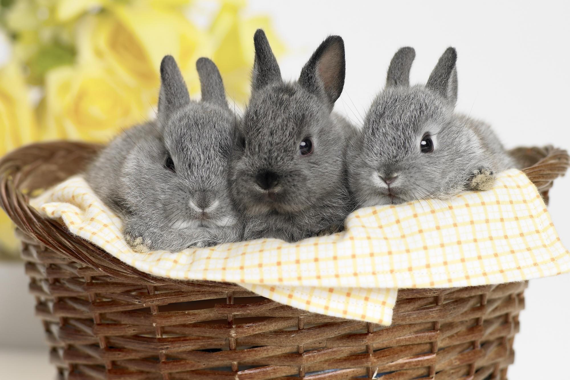 52061 Hintergrundbild herunterladen Kaninchen, Tiere, Sitzen, Korb - Bildschirmschoner und Bilder kostenlos
