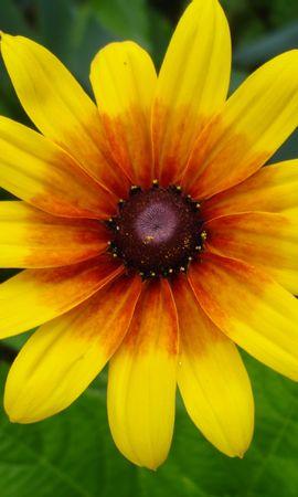 229 скачать обои Растения, Цветы - заставки и картинки бесплатно
