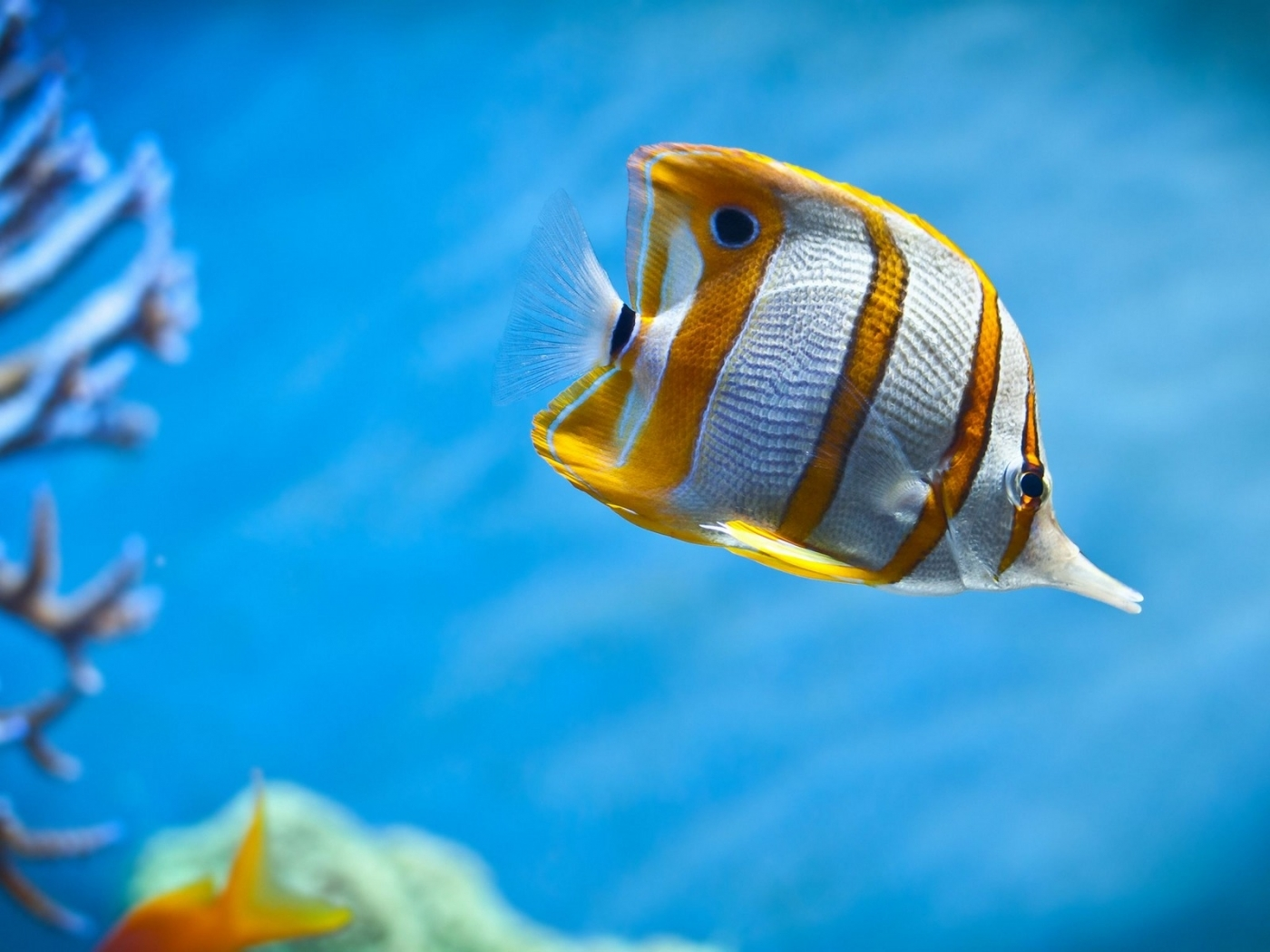 40397 download wallpaper Animals, Fishes screensavers and pictures for free