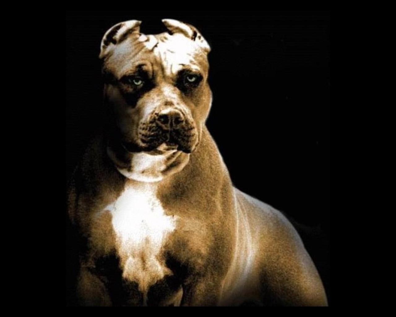 19246 download wallpaper Animals, Dogs screensavers and pictures for free