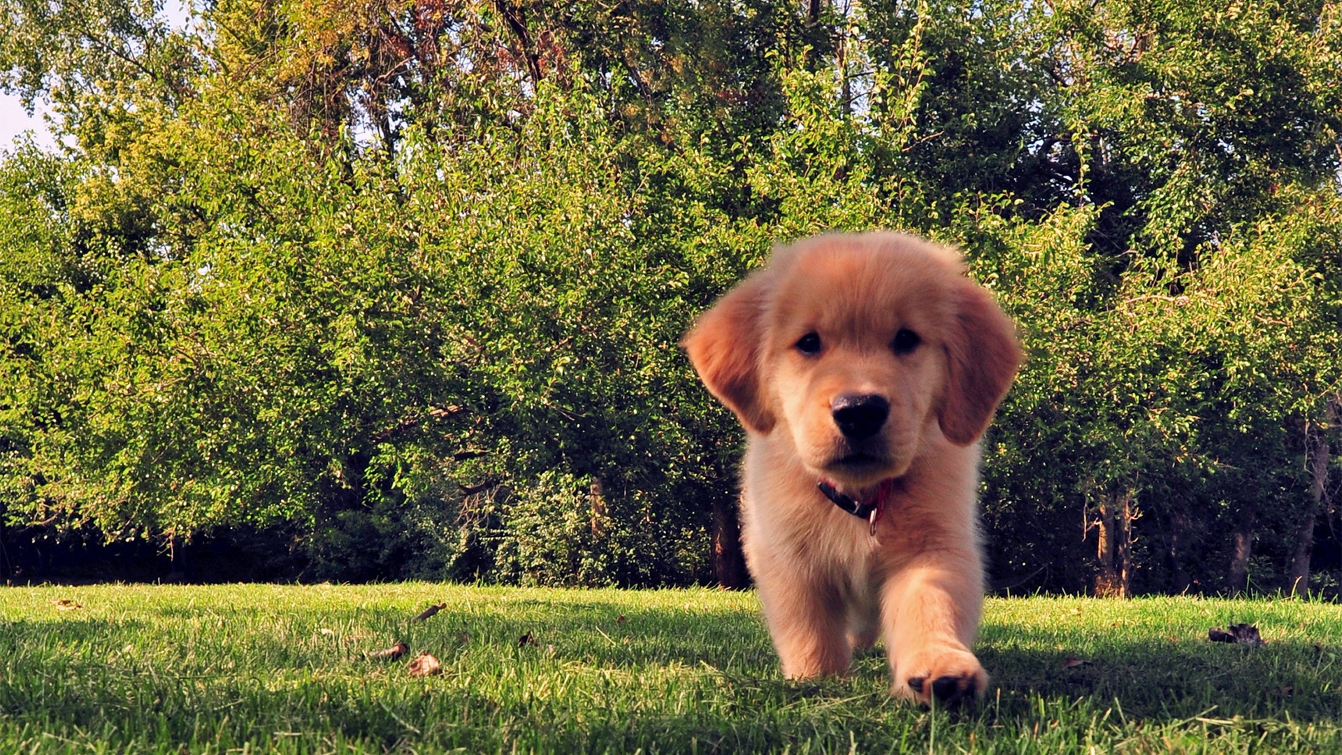 46436 download wallpaper Animals, Dogs screensavers and pictures for free