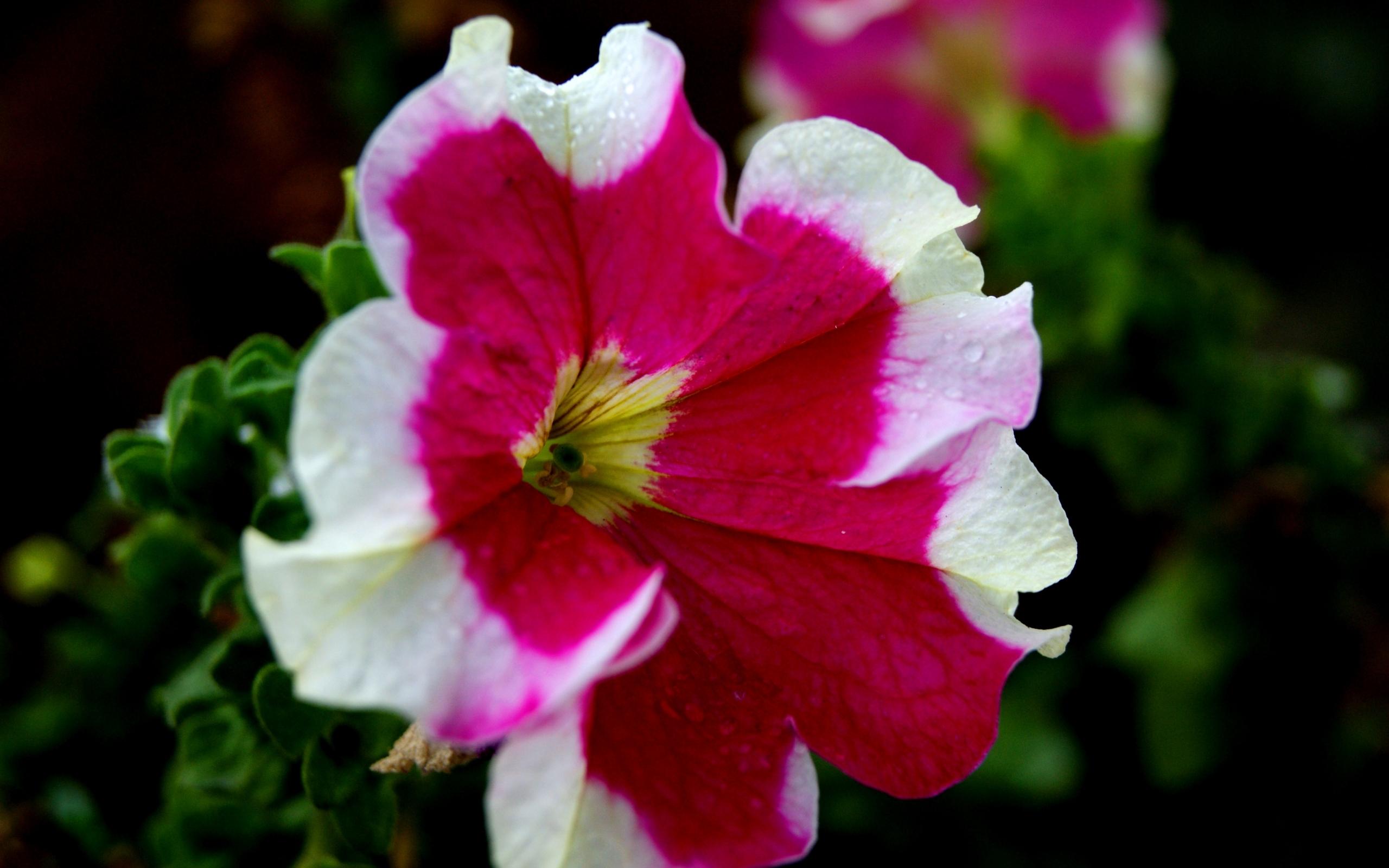 45903 скачать обои Растения, Цветы - заставки и картинки бесплатно