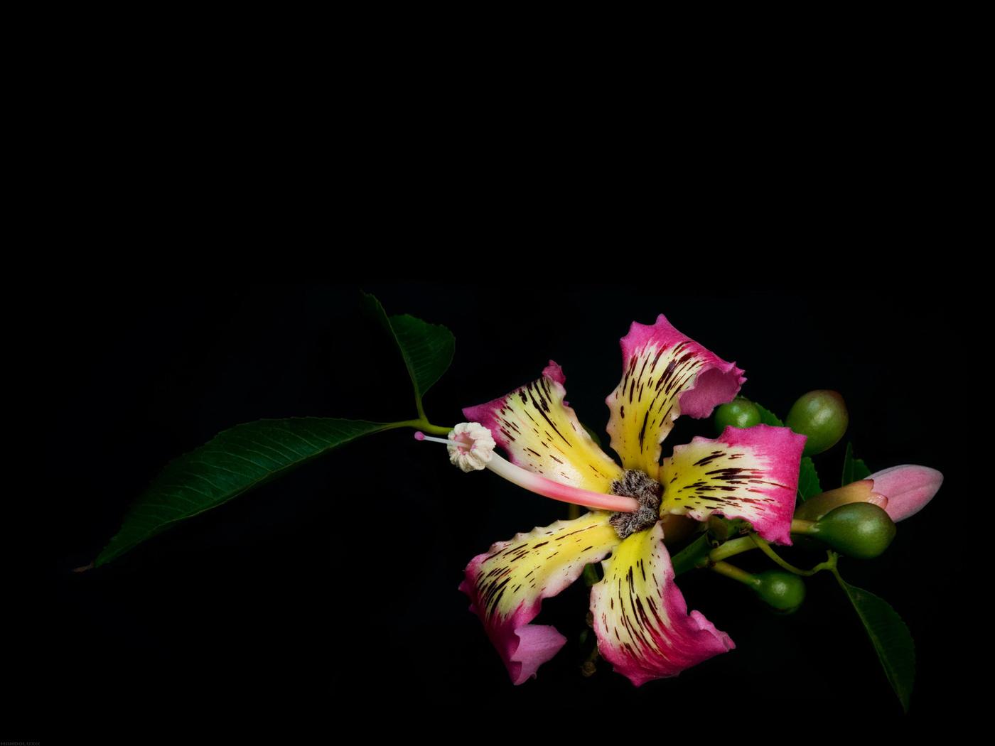 26703 скачать обои Растения, Цветы, Фон - заставки и картинки бесплатно