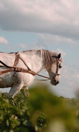 4869 download wallpaper Animals, Horses screensavers and pictures for free
