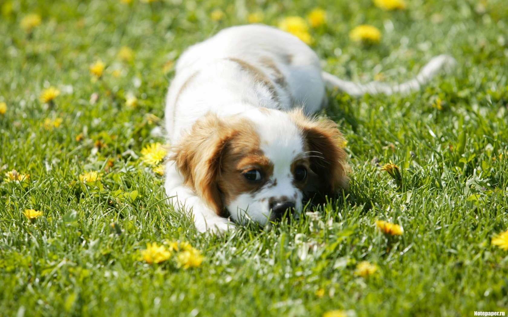 2838 download wallpaper Animals, Dogs screensavers and pictures for free