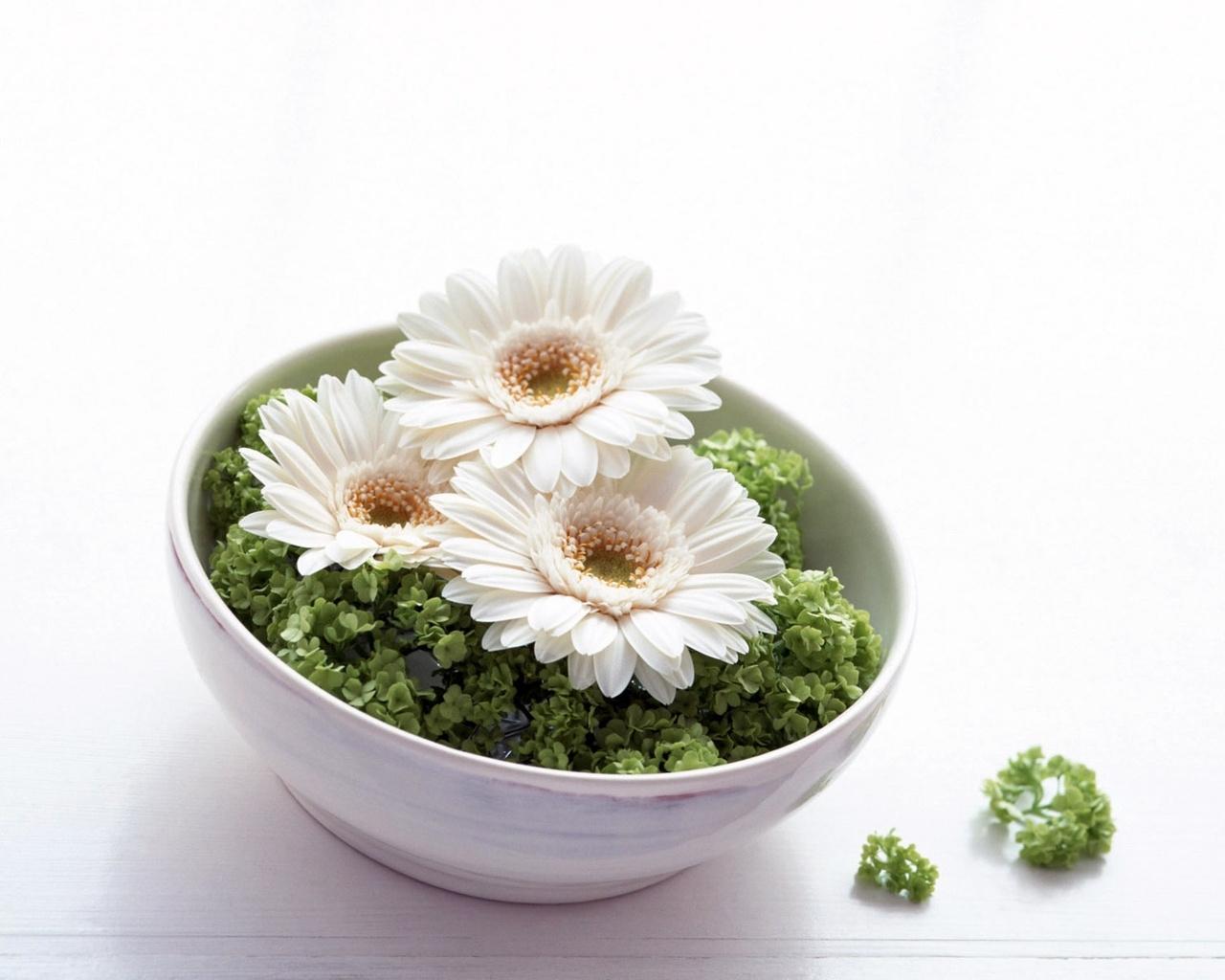 3102 скачать обои Растения, Цветы - заставки и картинки бесплатно