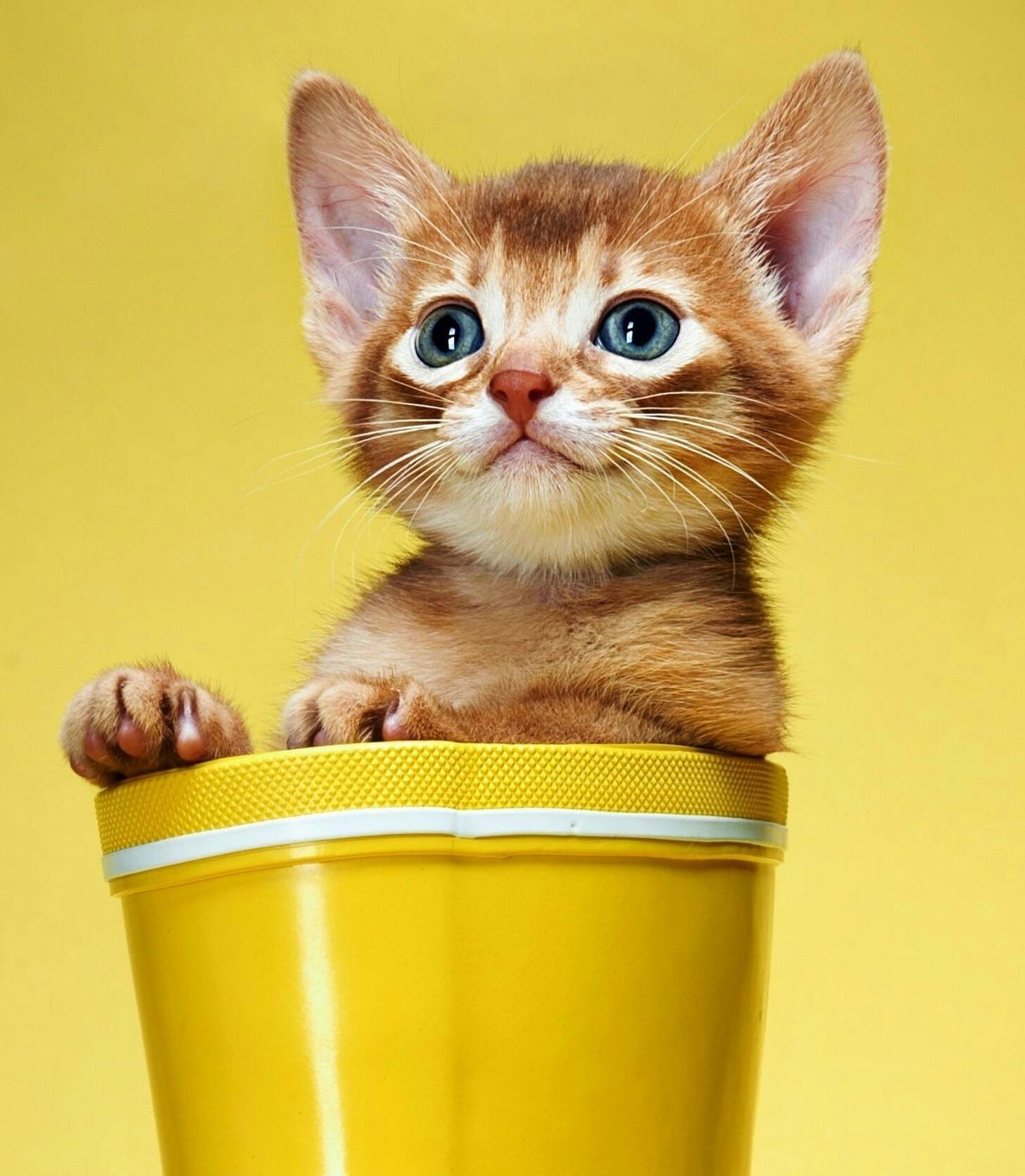 23087 скачать обои Животные, Кошки (Коты, Котики) - заставки и картинки бесплатно