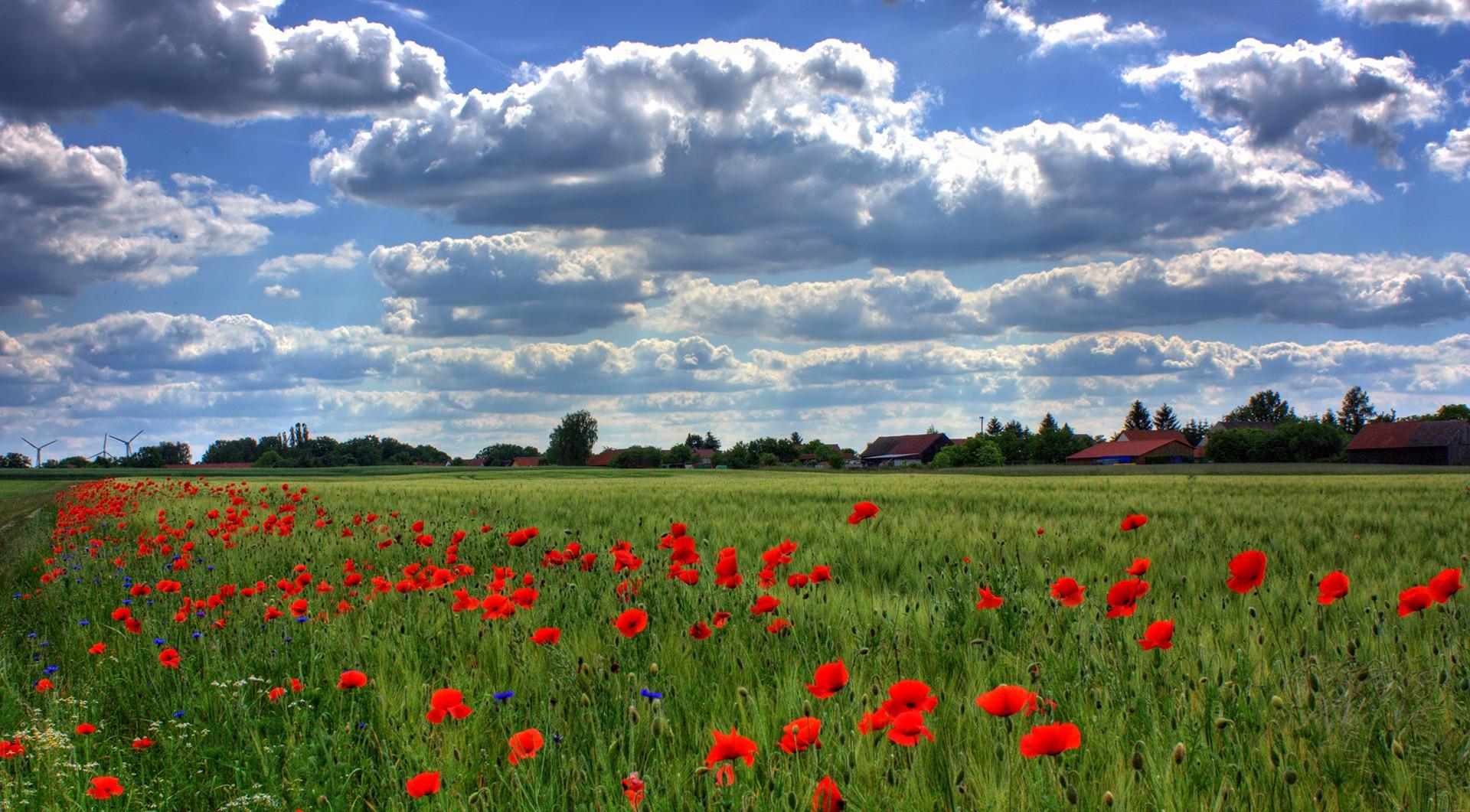 142152 скачать обои Природа, Бранденбург, Поле, Маки, Небо, Облака - заставки и картинки бесплатно