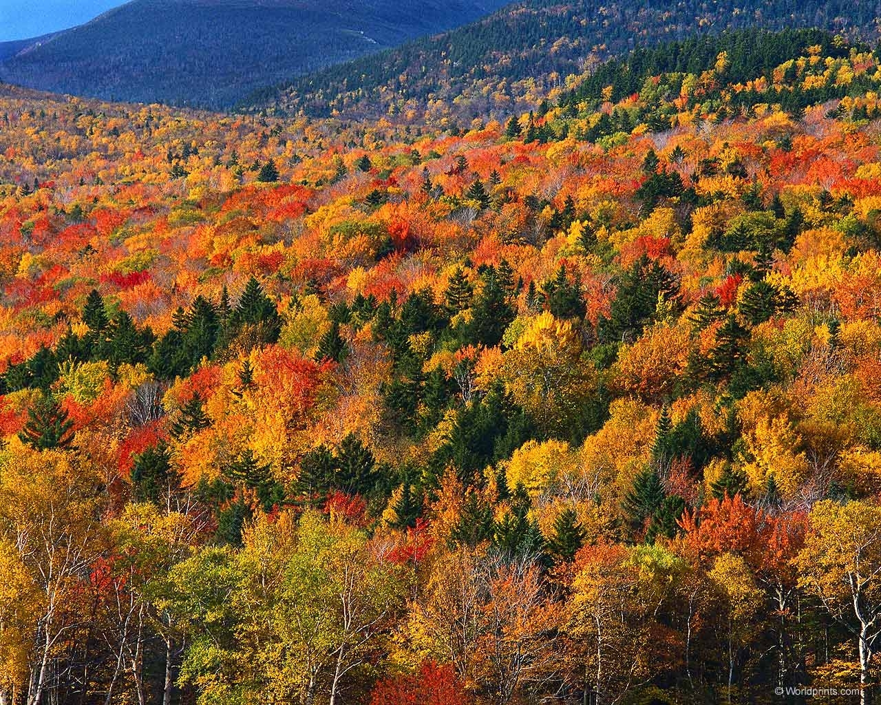 6321 download wallpaper Landscape, Trees, Autumn screensavers and pictures for free