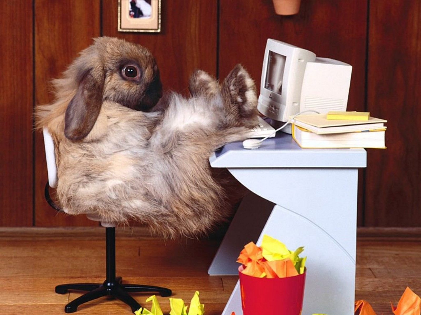 2043 download wallpaper Funny, Animals, Rodents, Rabbits screensavers and pictures for free
