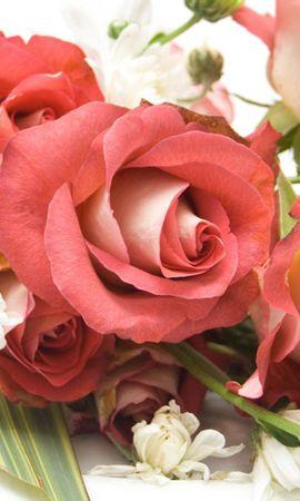 93092 скачать обои Цветы, Букет, Композиция, Красивый, Розы - заставки и картинки бесплатно