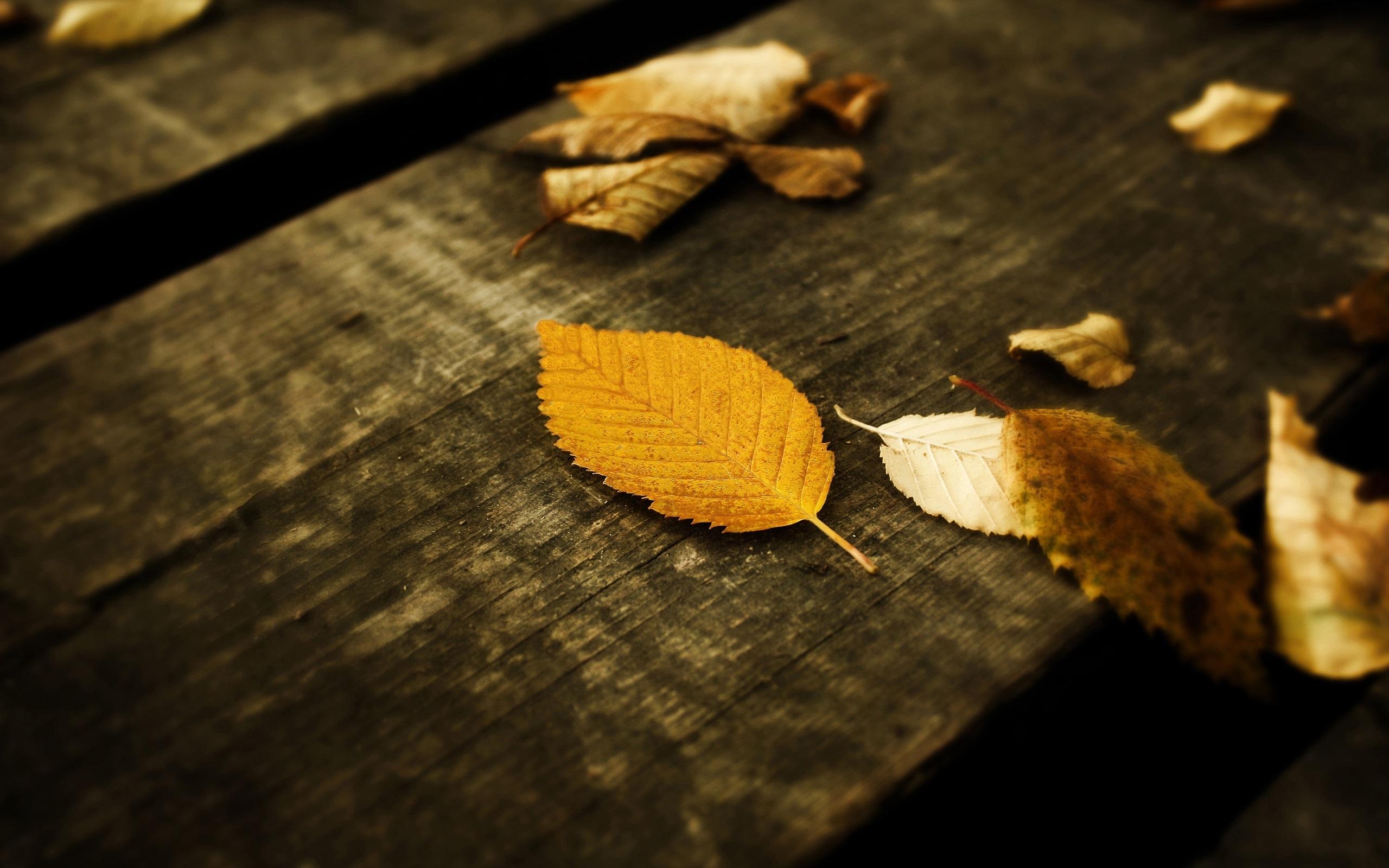 23056 скачать обои Растения, Фон, Осень, Листья - заставки и картинки бесплатно