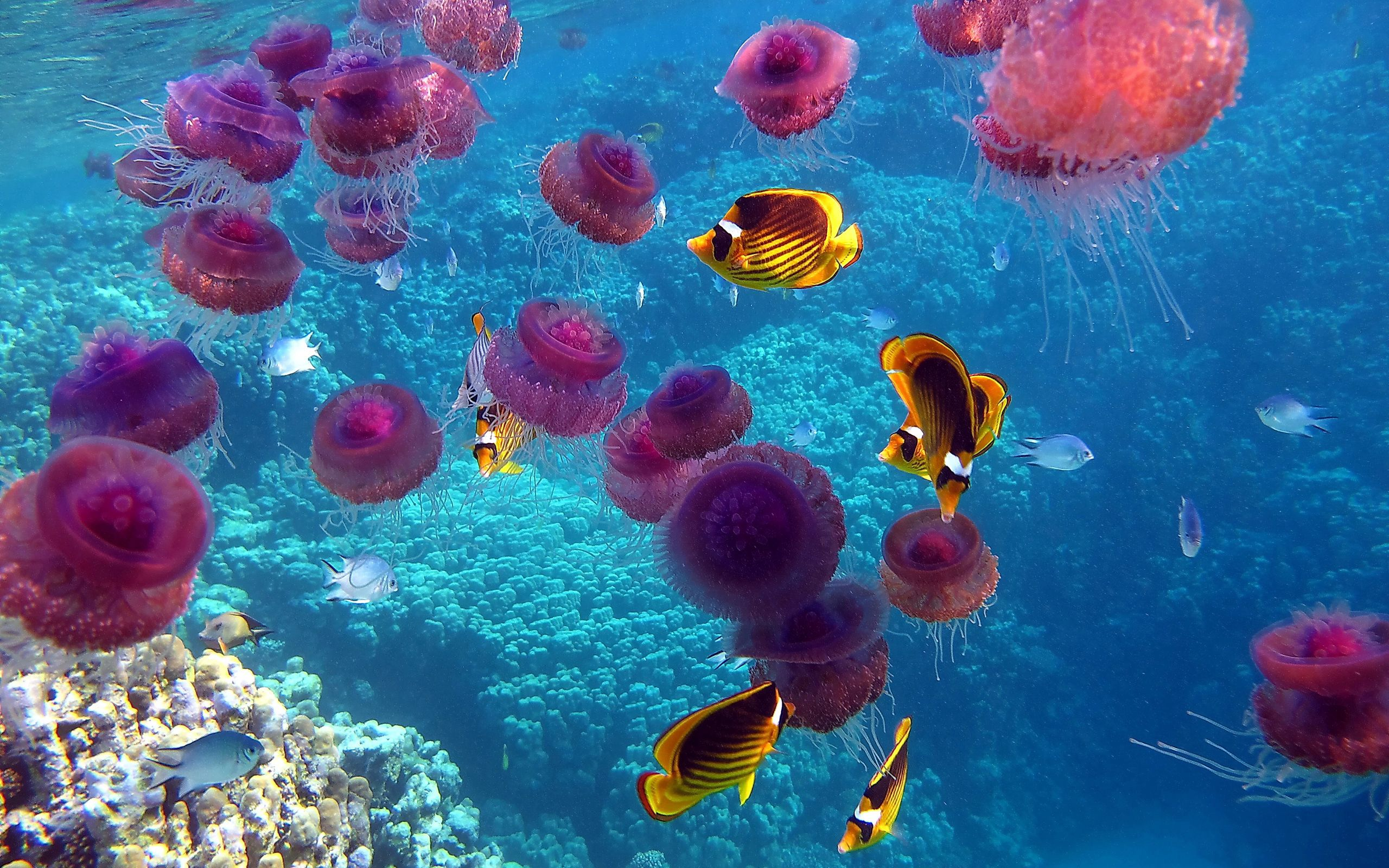 137873 download wallpaper Animals, Jellyfish, Fishes, Underwater World, To Swim, Swim screensavers and pictures for free