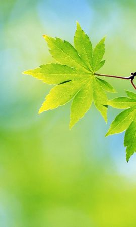 45660 скачать обои Растения, Листья, Объекты - заставки и картинки бесплатно