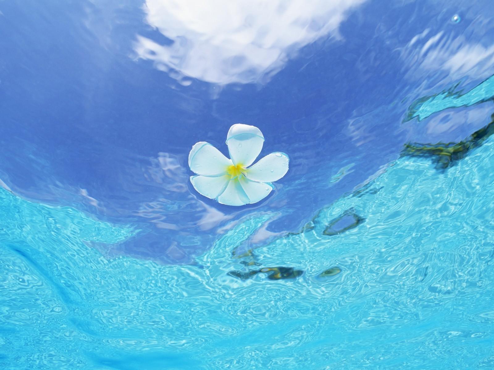 15631 descargar fondo de pantalla Plantas, Flores, Agua: protectores de pantalla e imágenes gratis