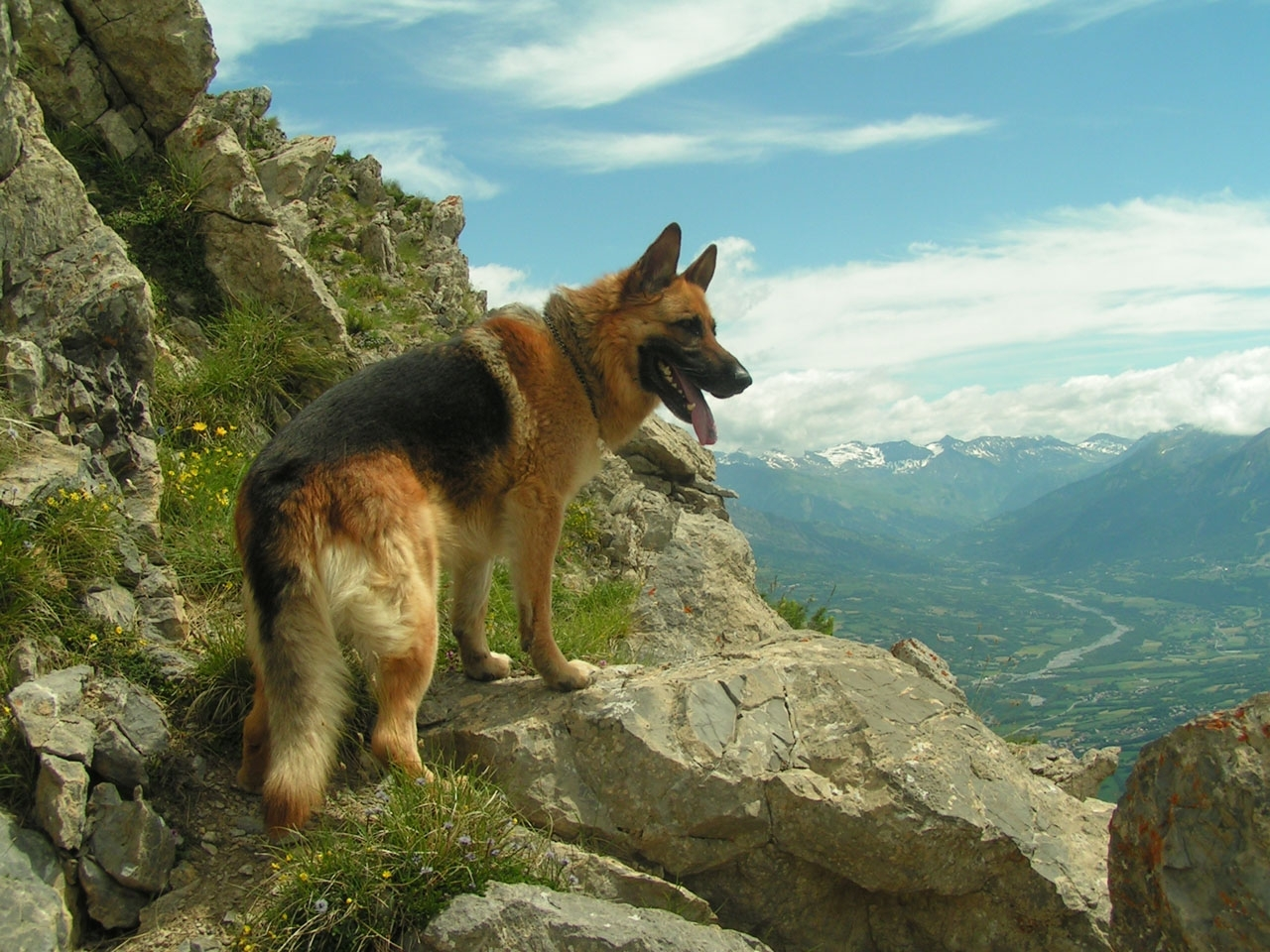 24875 download wallpaper Animals, Dogs, Mountains screensavers and pictures for free