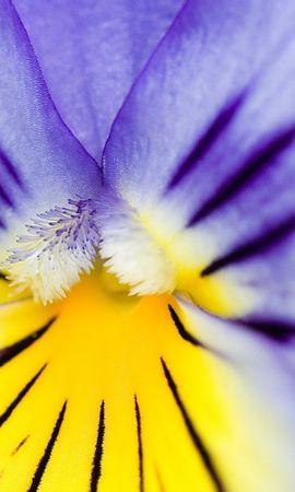 8283 скачать обои Растения, Цветы, Фон - заставки и картинки бесплатно