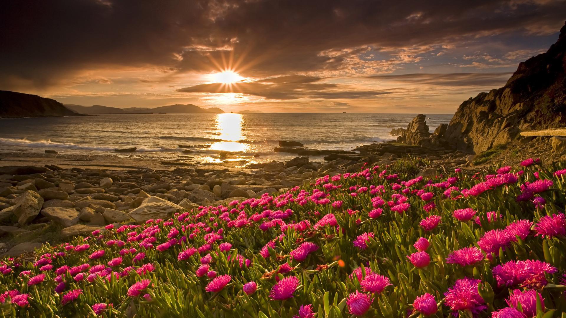12077 Hintergrundbild herunterladen Pflanzen, Sunset, Blumen, Landschaft, Sun - Bildschirmschoner und Bilder kostenlos