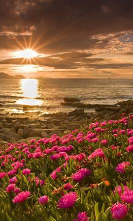 12077 télécharger le fond d'écran Plantes, Paysage, Fleurs, Coucher De Soleil, Sun - économiseurs d'écran et images gratuitement