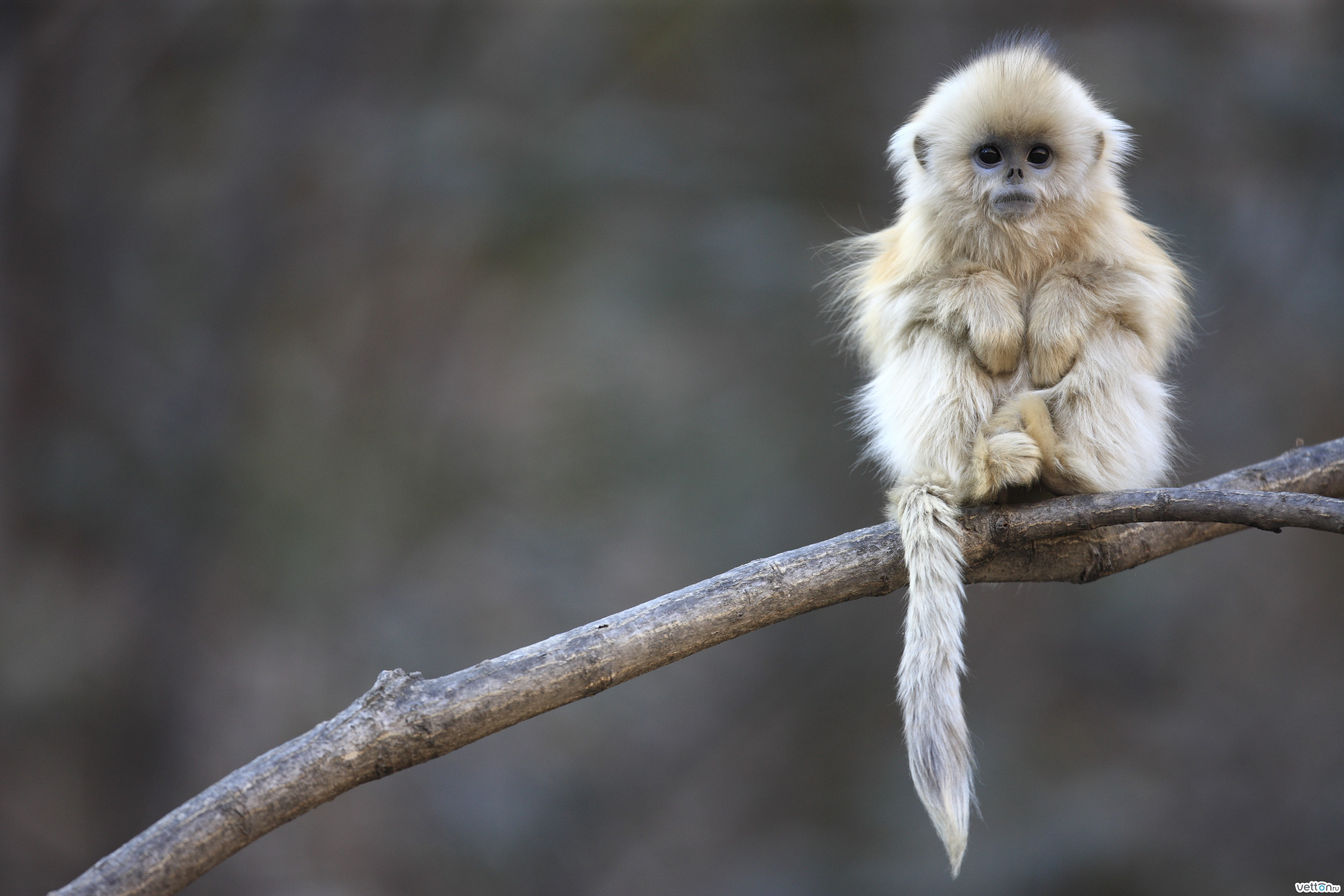 15826 Screensavers and Wallpapers Monkeys for phone. Download Animals, Monkeys pictures for free