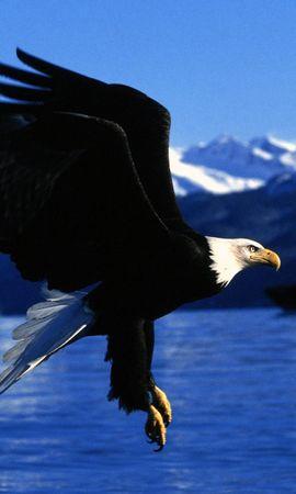 3500 baixar papel de parede Animais, Aves, Eagles - protetores de tela e imagens gratuitamente