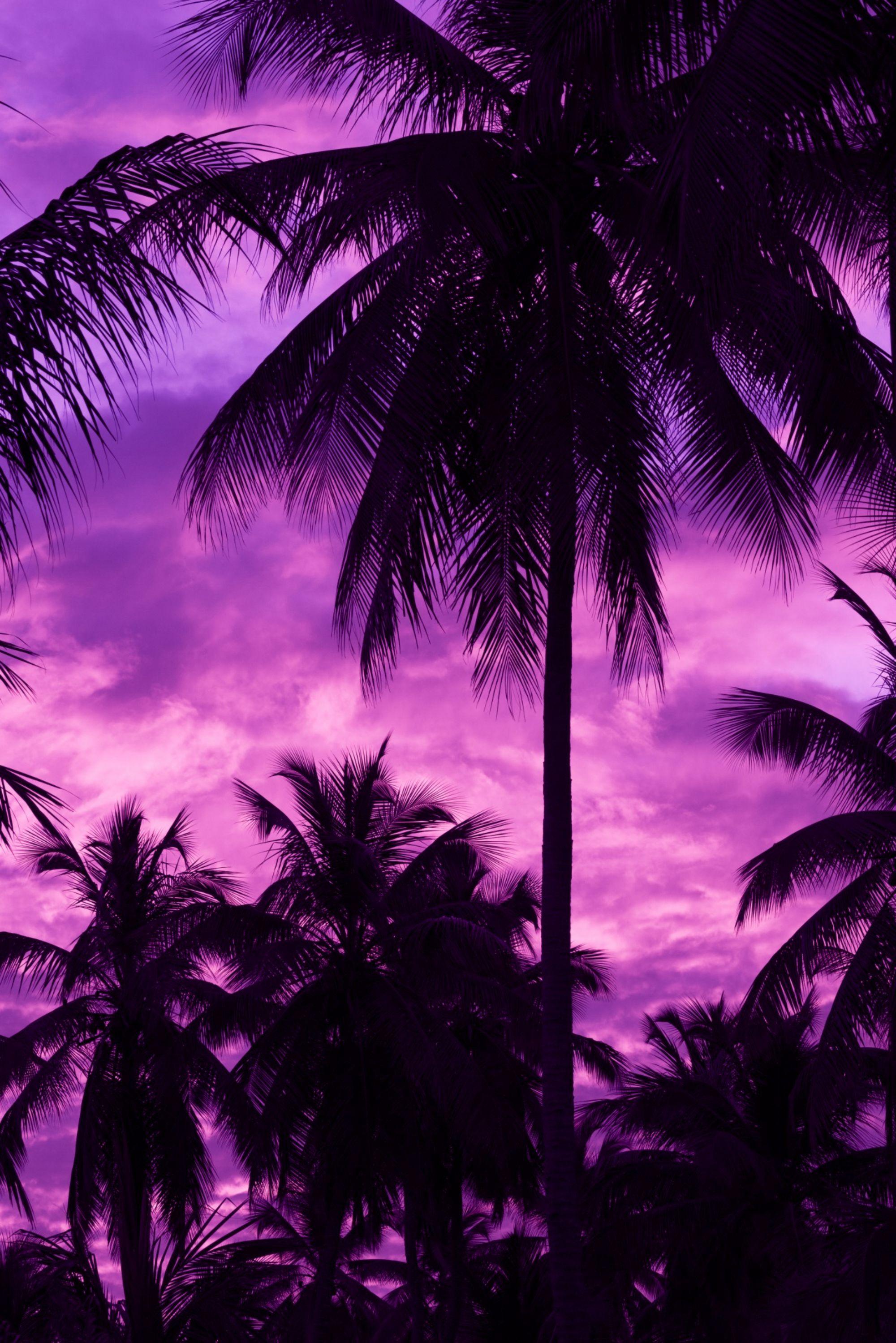137401 скачать обои Темные, Закат, Тропики, Фиолетовый, Пальмы, Небо - заставки и картинки бесплатно