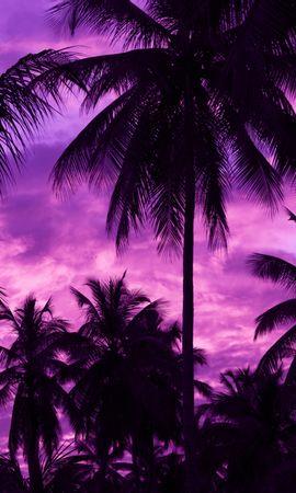 137401 baixar papel de parede Escuro, Pôr Do Sol, Trópicos, Roxo, Violeta, Céu, Palms - protetores de tela e imagens gratuitamente