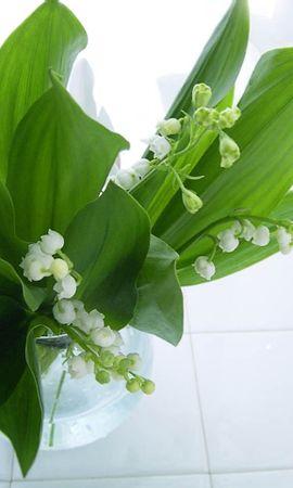 24743 скачать обои Растения, Цветы, Ландыши - заставки и картинки бесплатно