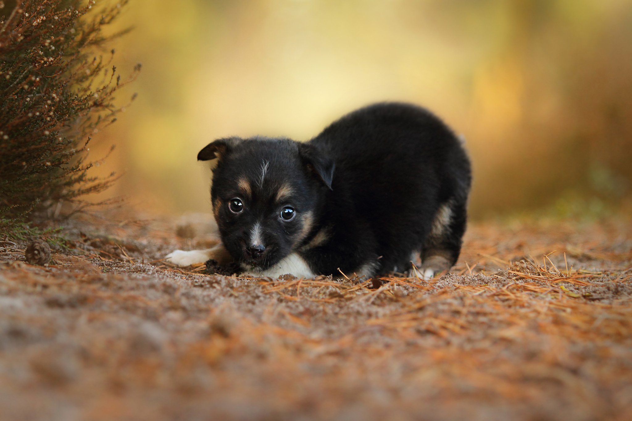 103510 Screensavers and Wallpapers Puppy for phone. Download Animals, Grass, Dog, Sight, Opinion, Puppy pictures for free