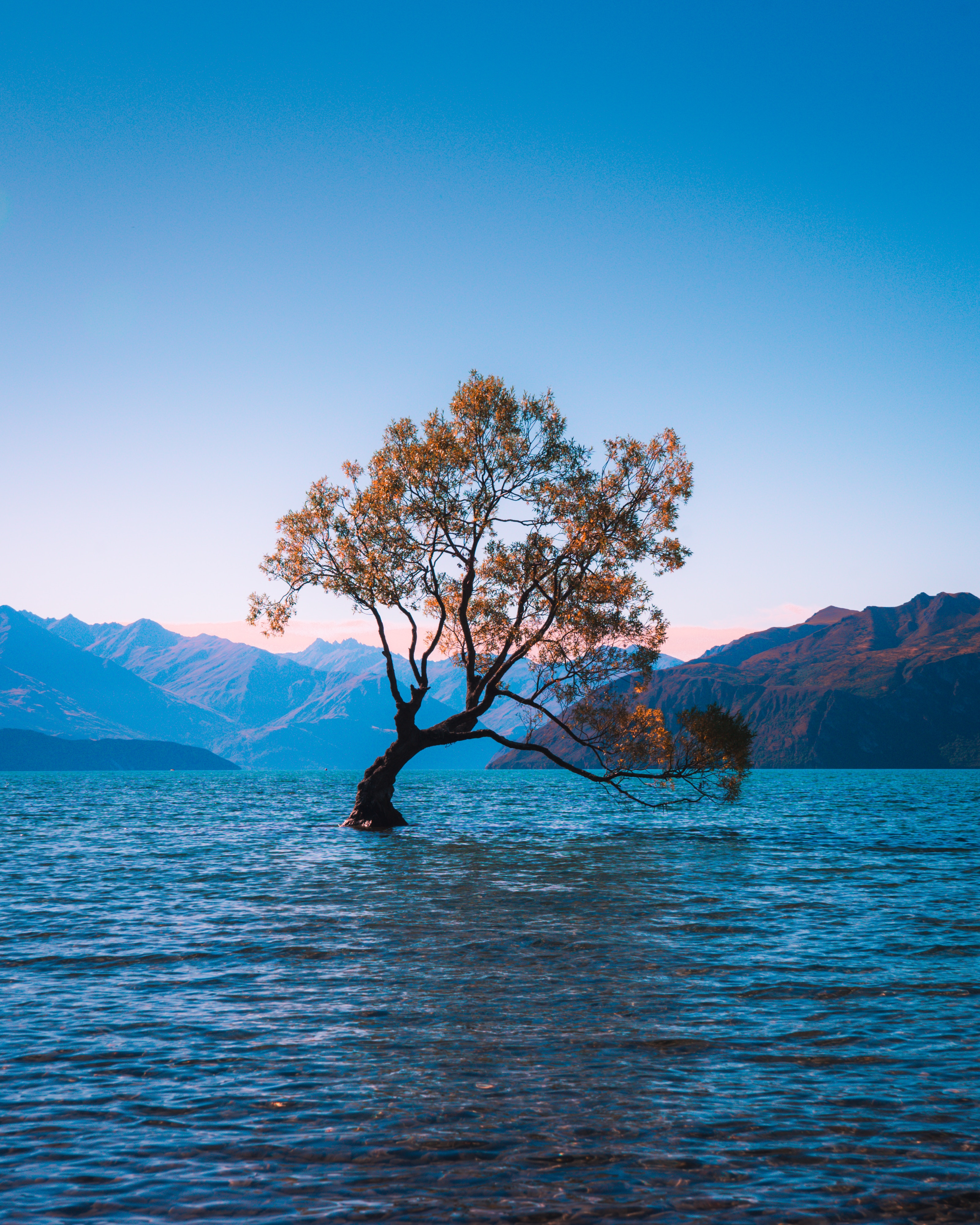 73474 download wallpaper Nature, Lake, New Zealand, Wood, Tree, Wanaka, Alone, Lonely screensavers and pictures for free