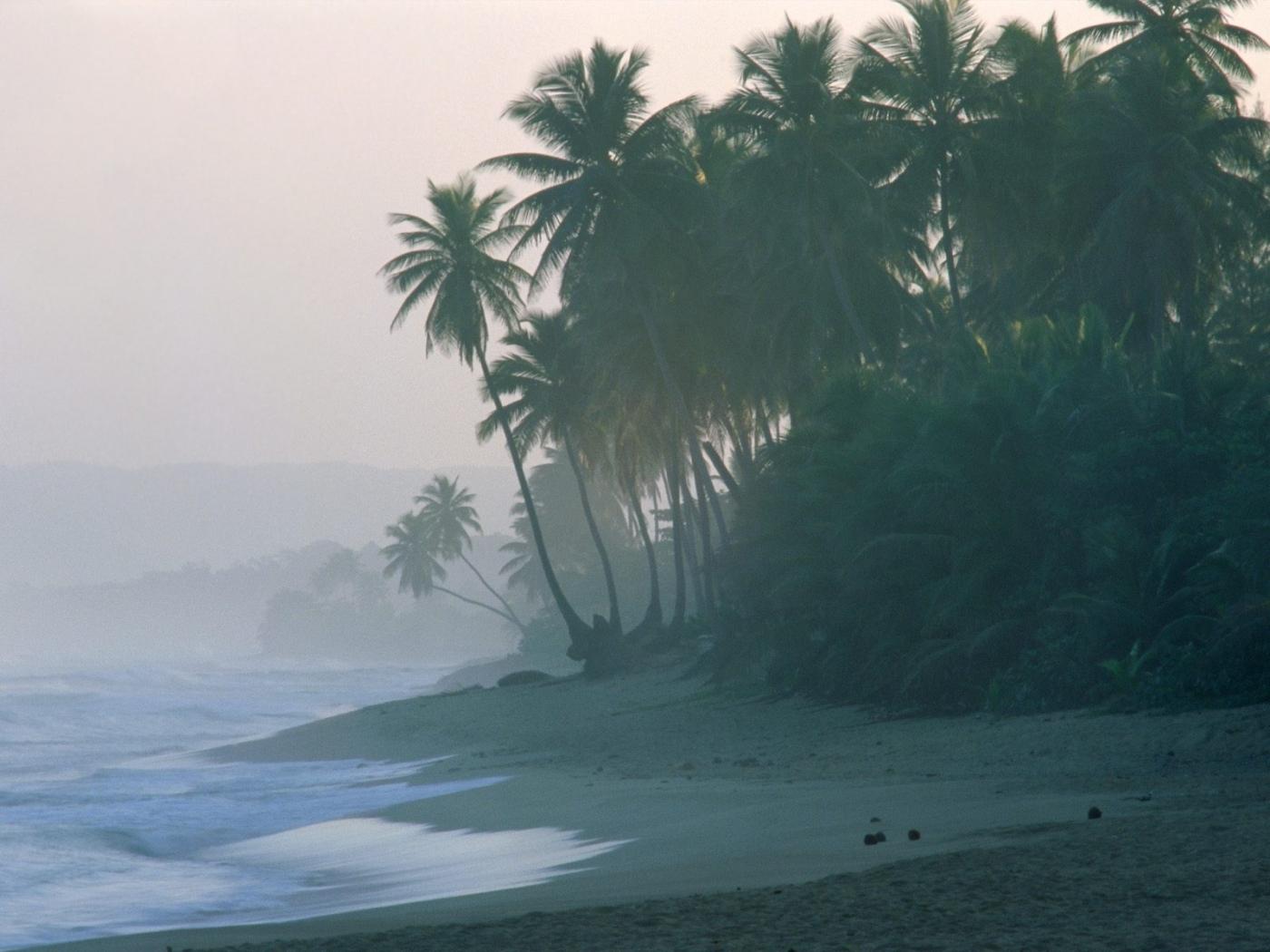27594 скачать обои Пейзаж, Волны, Пляж, Пальмы - заставки и картинки бесплатно