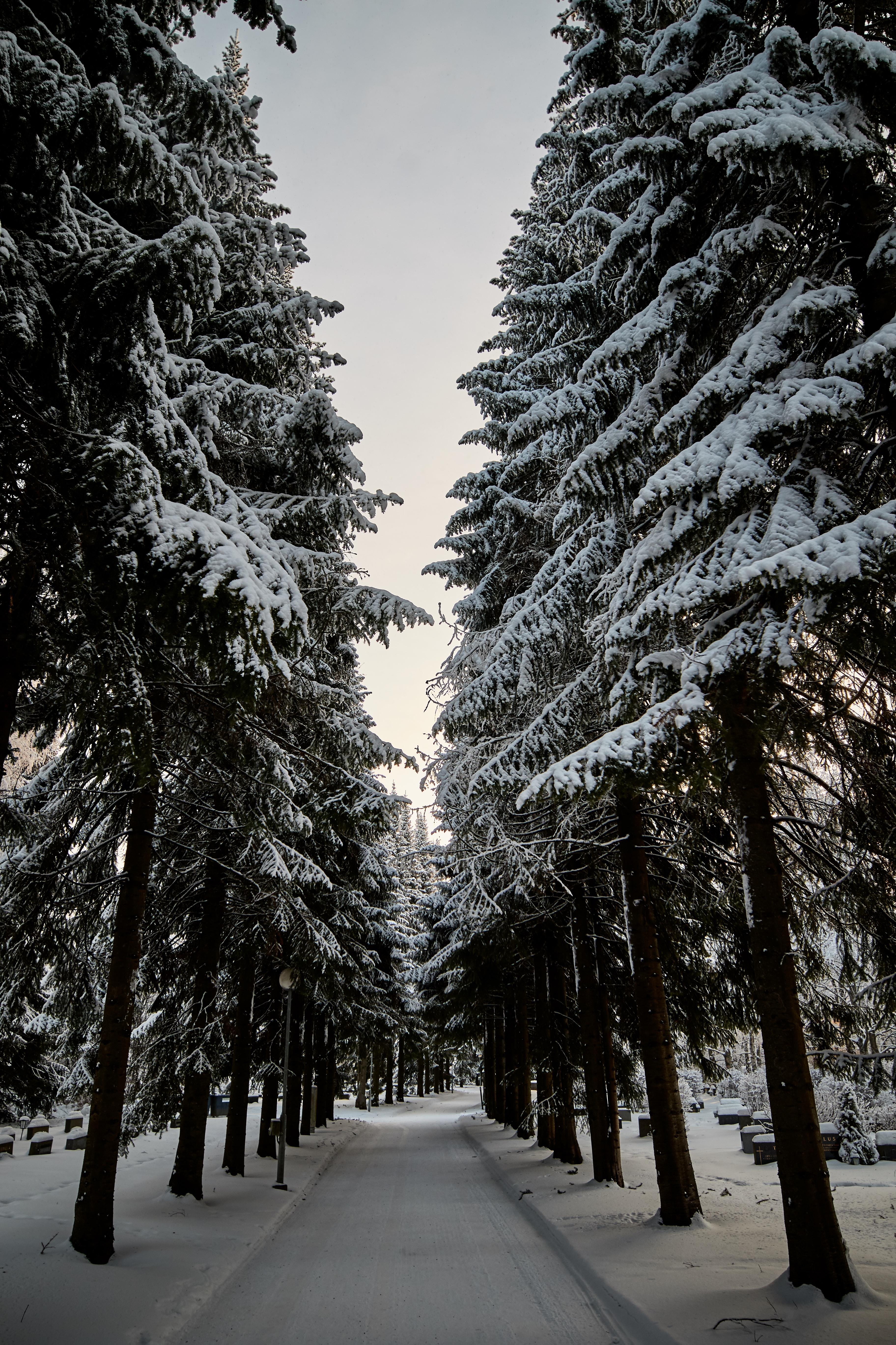 69503 скачать обои Природа, Дорога, Снег, Зима, Деревья, Елки - заставки и картинки бесплатно