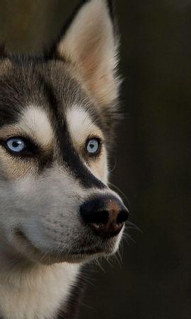 46738 baixar papel de parede Animais, Cães - protetores de tela e imagens gratuitamente