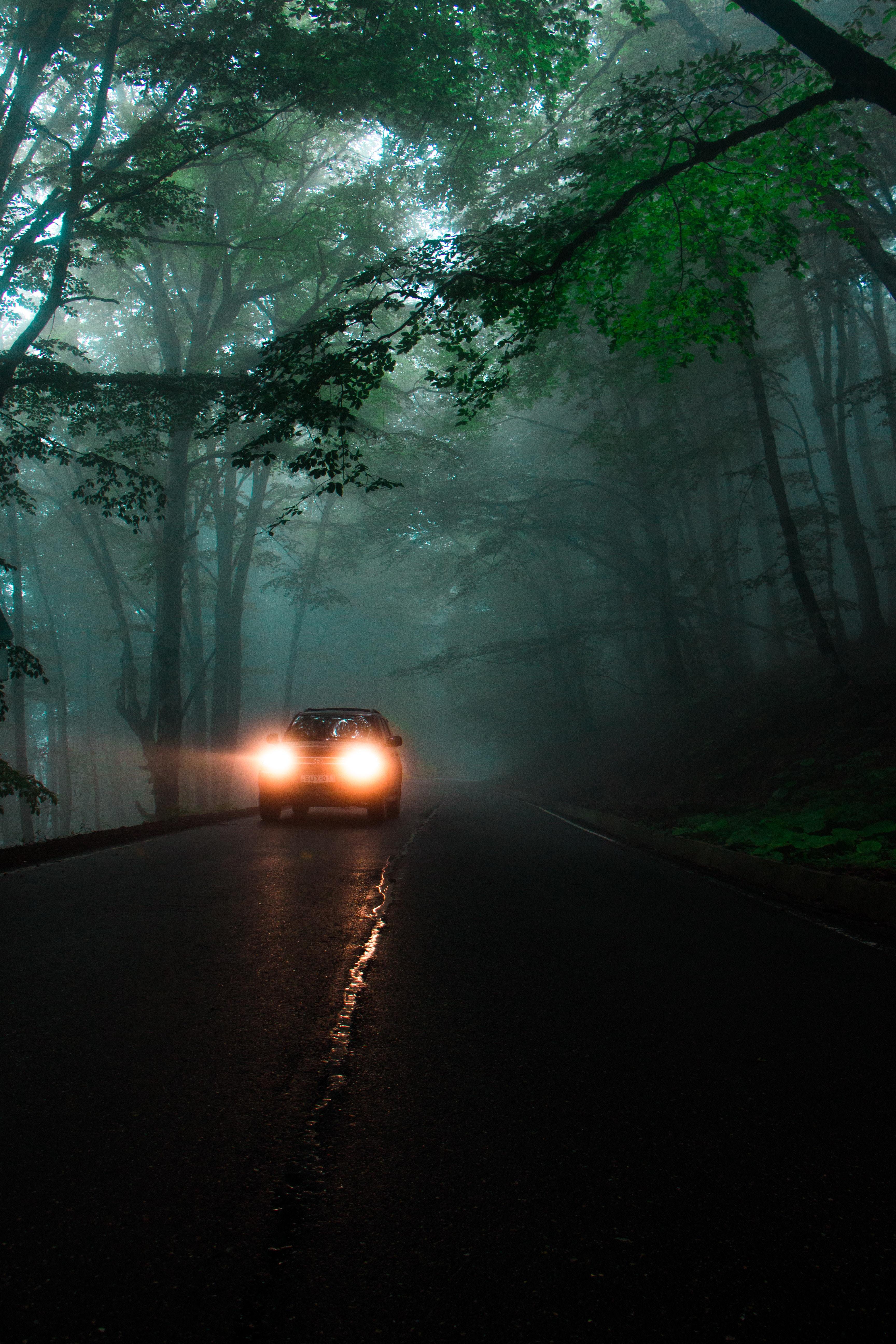 67624 Заставки и Обои Фары на телефон. Скачать Автомобиль, Темные, Деревья, Свет, Дорога, Туман, Фары картинки бесплатно