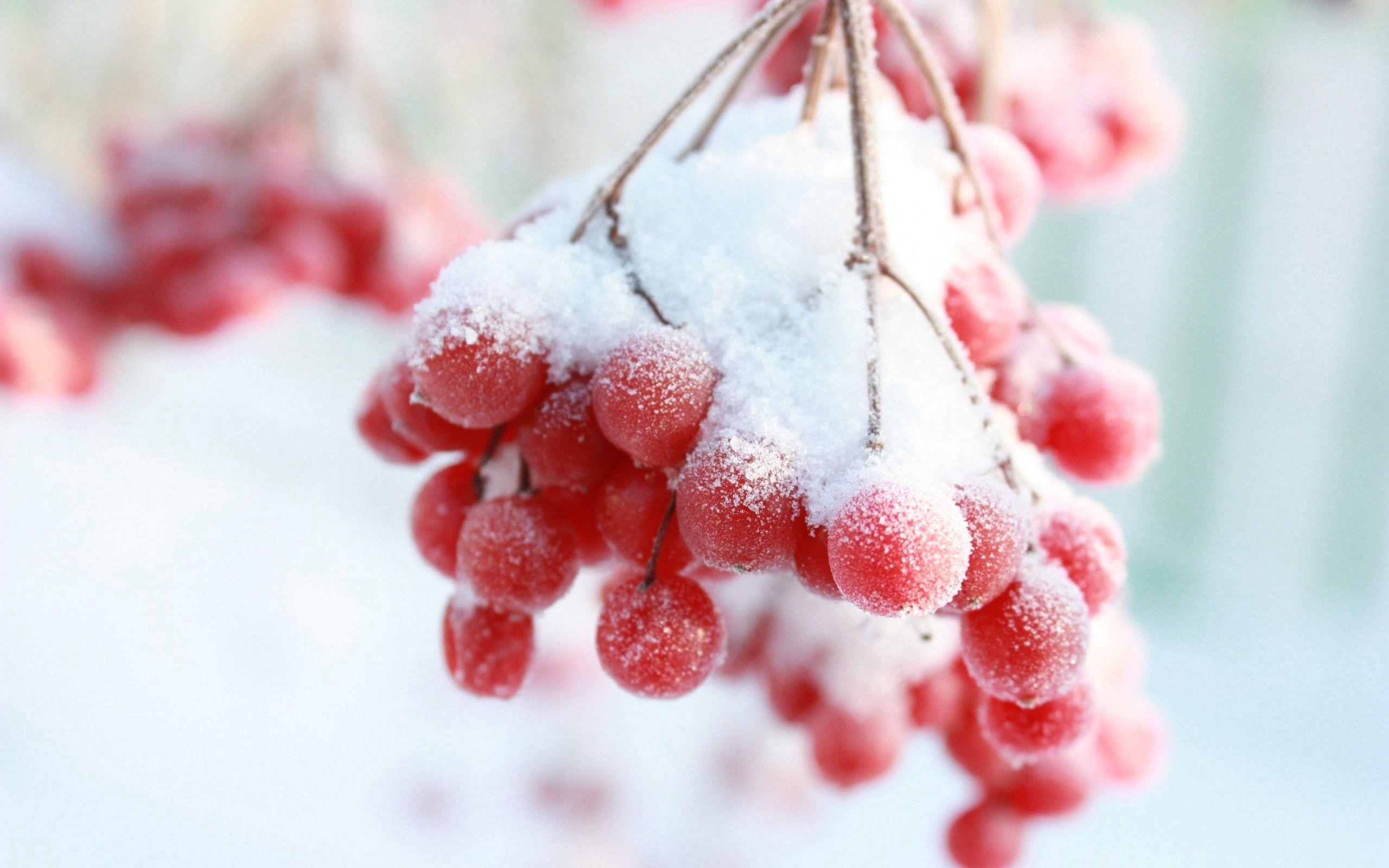 54255 скачать обои Рябина, Зима, Снег, Макро, Ветка, Ягода - заставки и картинки бесплатно