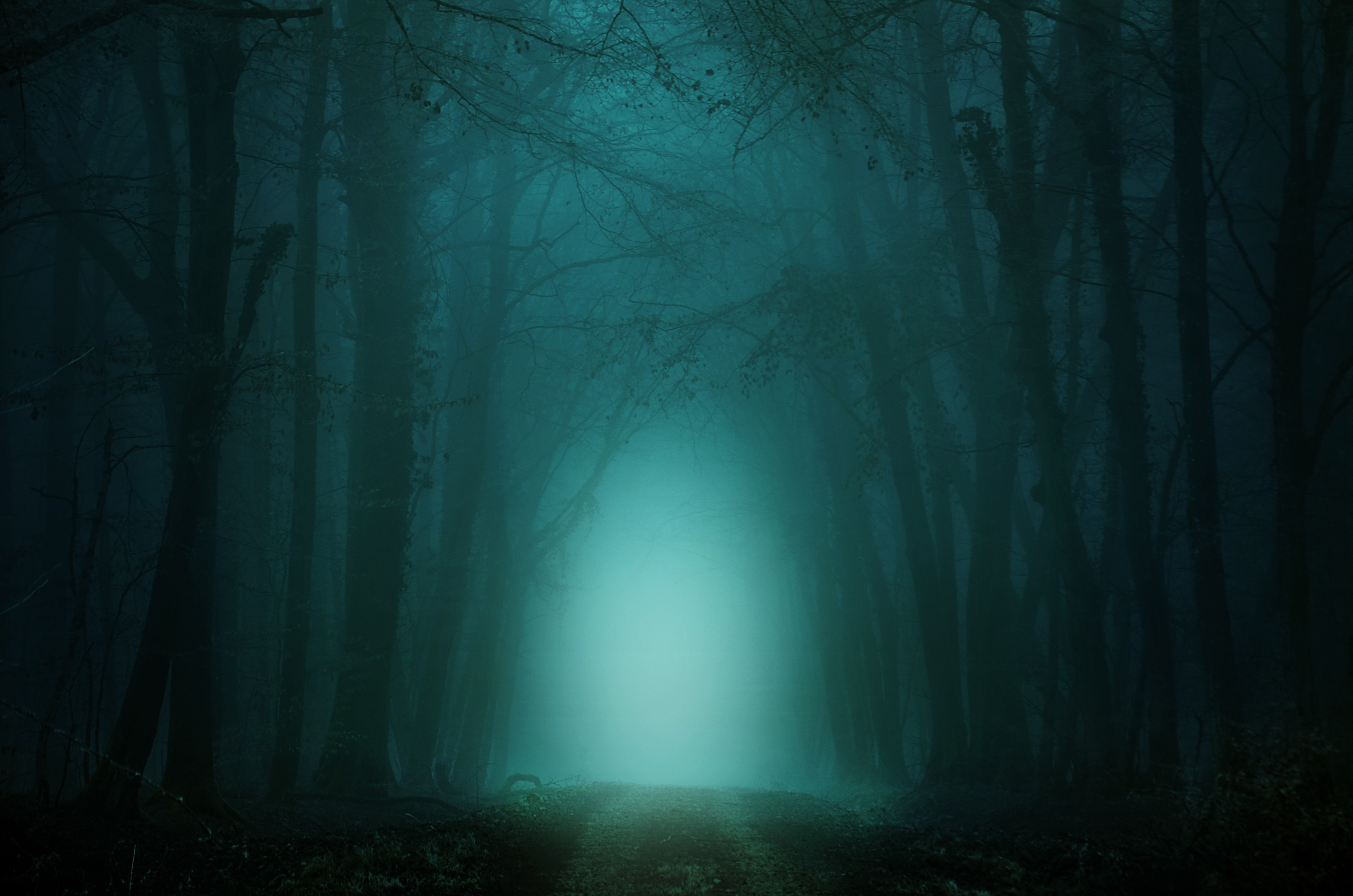 66139 download wallpaper Forest, Nature, Trees, Twilight, Fog, Path, Dusk, Trail screensavers and pictures for free