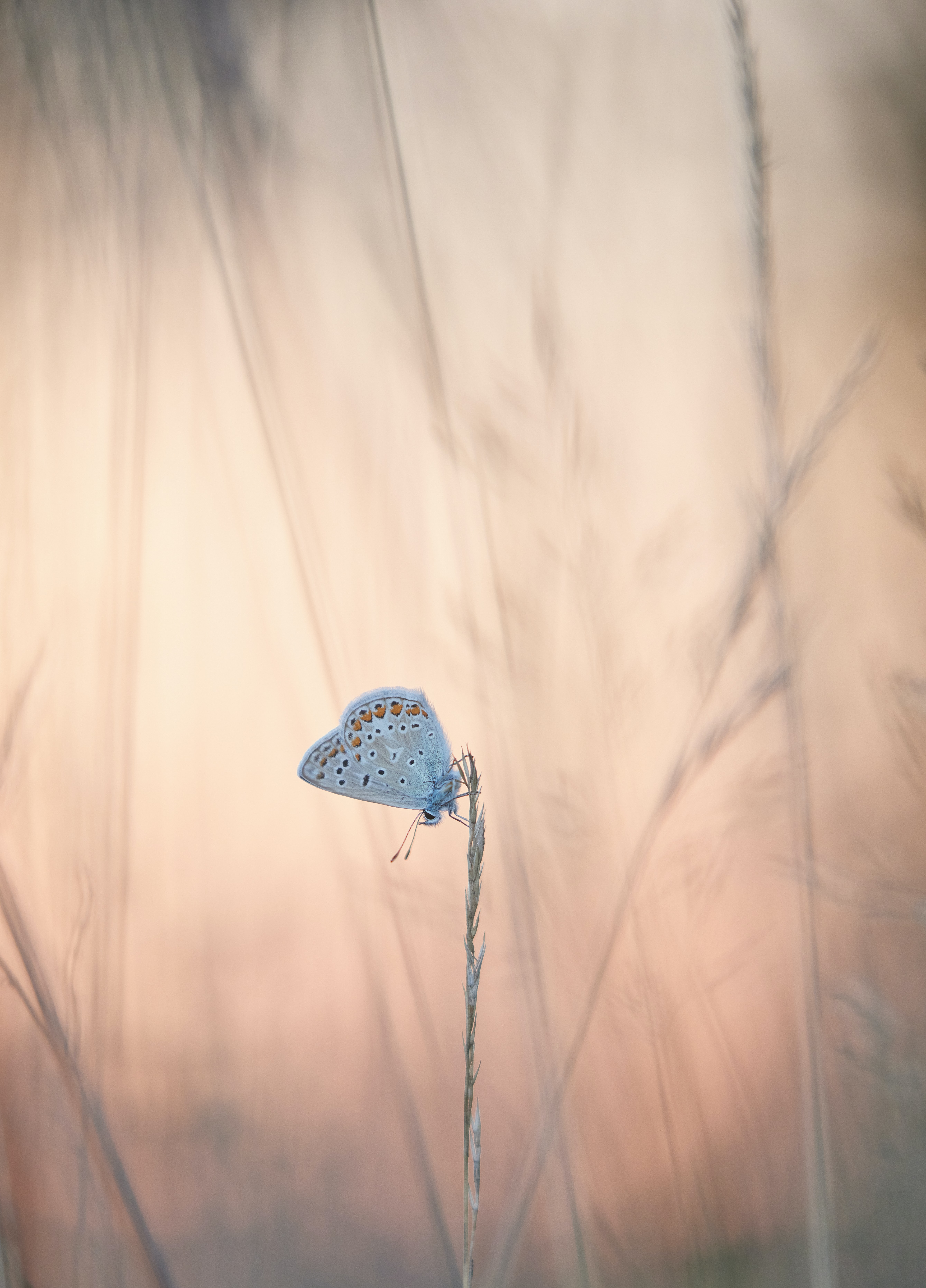 100102 download wallpaper Animals, Butterflies, Wings, Ears, Spikes, Grass screensavers and pictures for free
