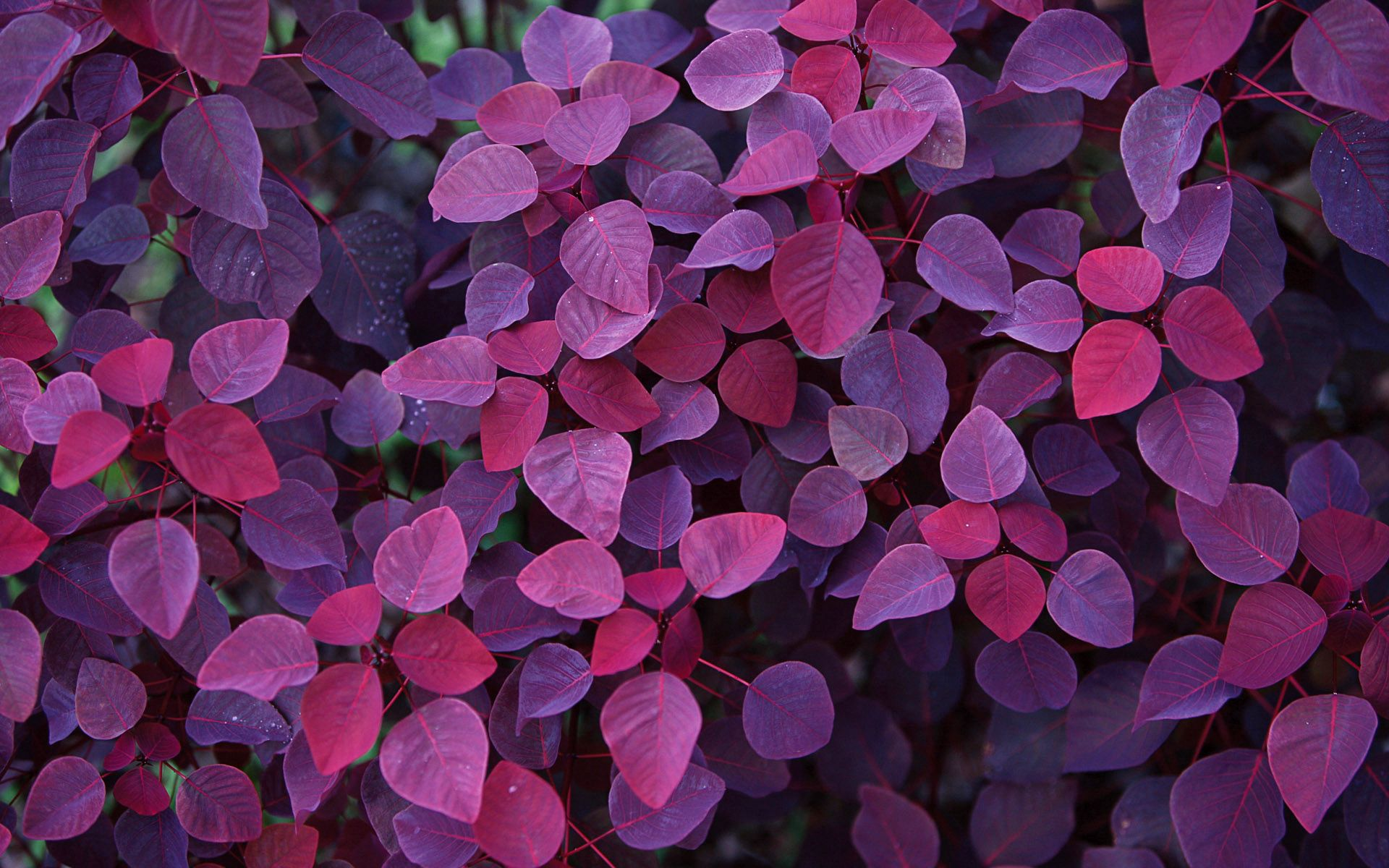 56389 Screensavers and Wallpapers Form for phone. Download Shine, Nature, Leaves, Plant, Light, Form pictures for free