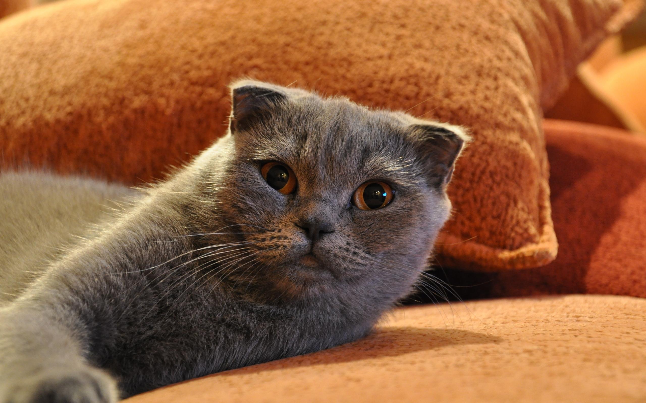 23509 скачать обои Животные, Кошки (Коты, Котики) - заставки и картинки бесплатно