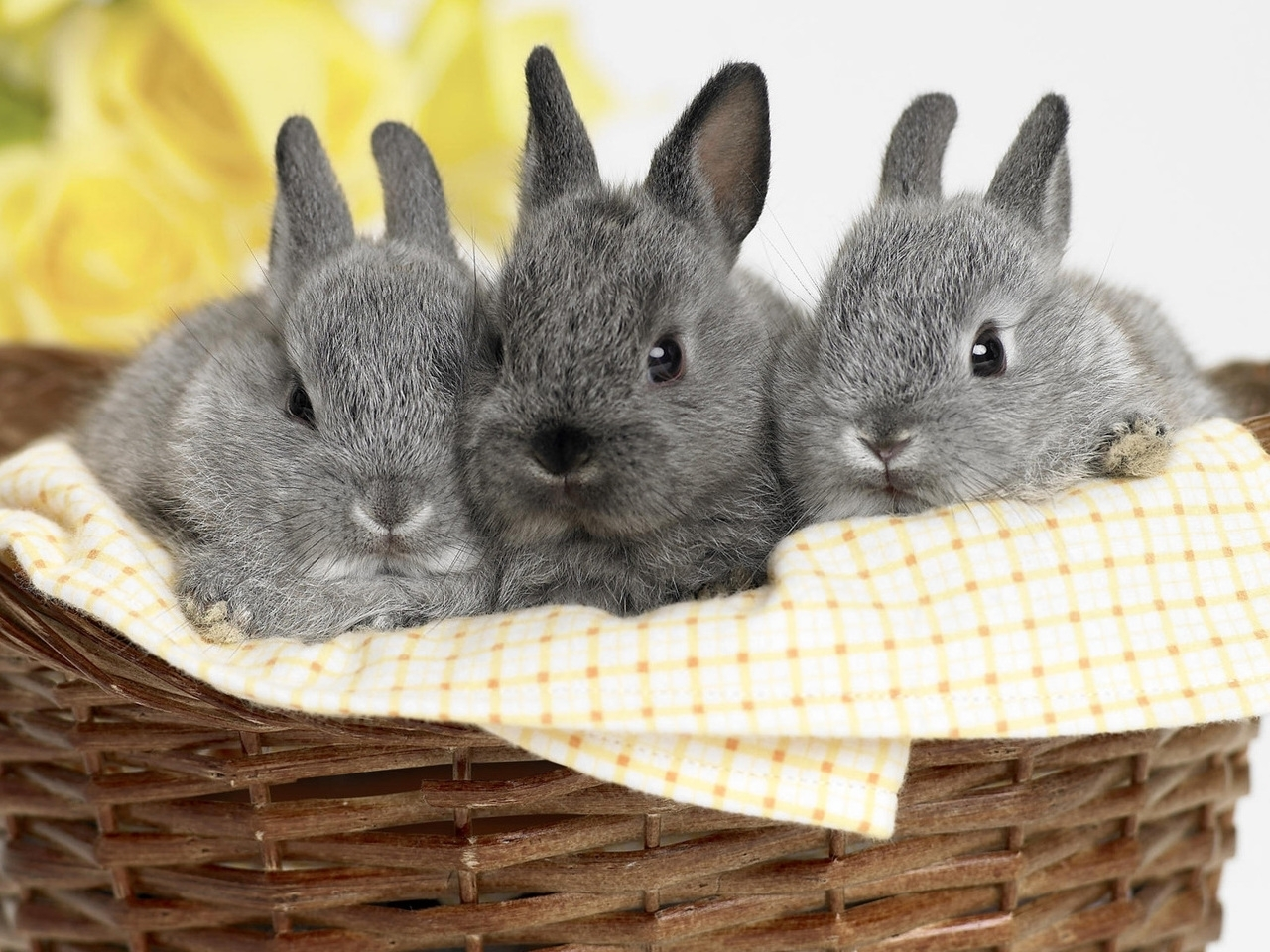 47070 download wallpaper Animals, Rabbits screensavers and pictures for free