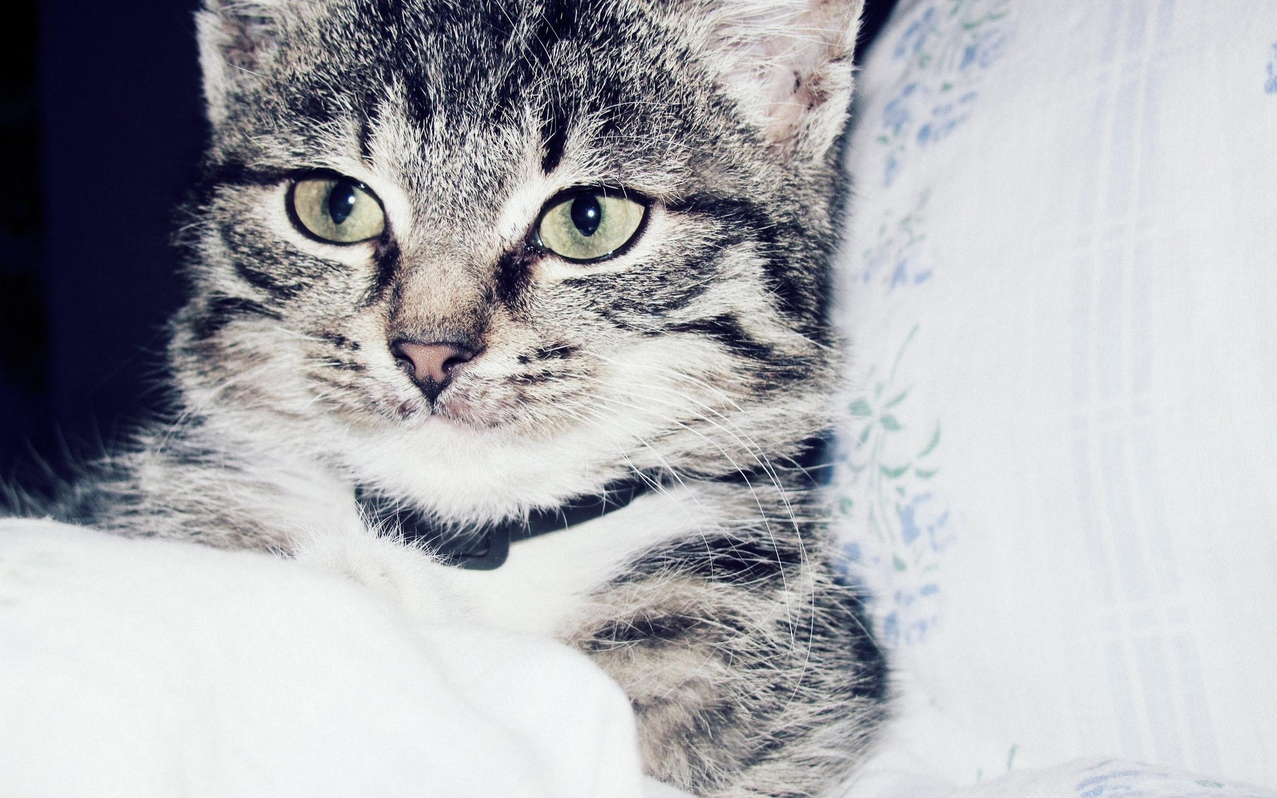 23765 скачать обои Животные, Кошки (Коты, Котики) - заставки и картинки бесплатно